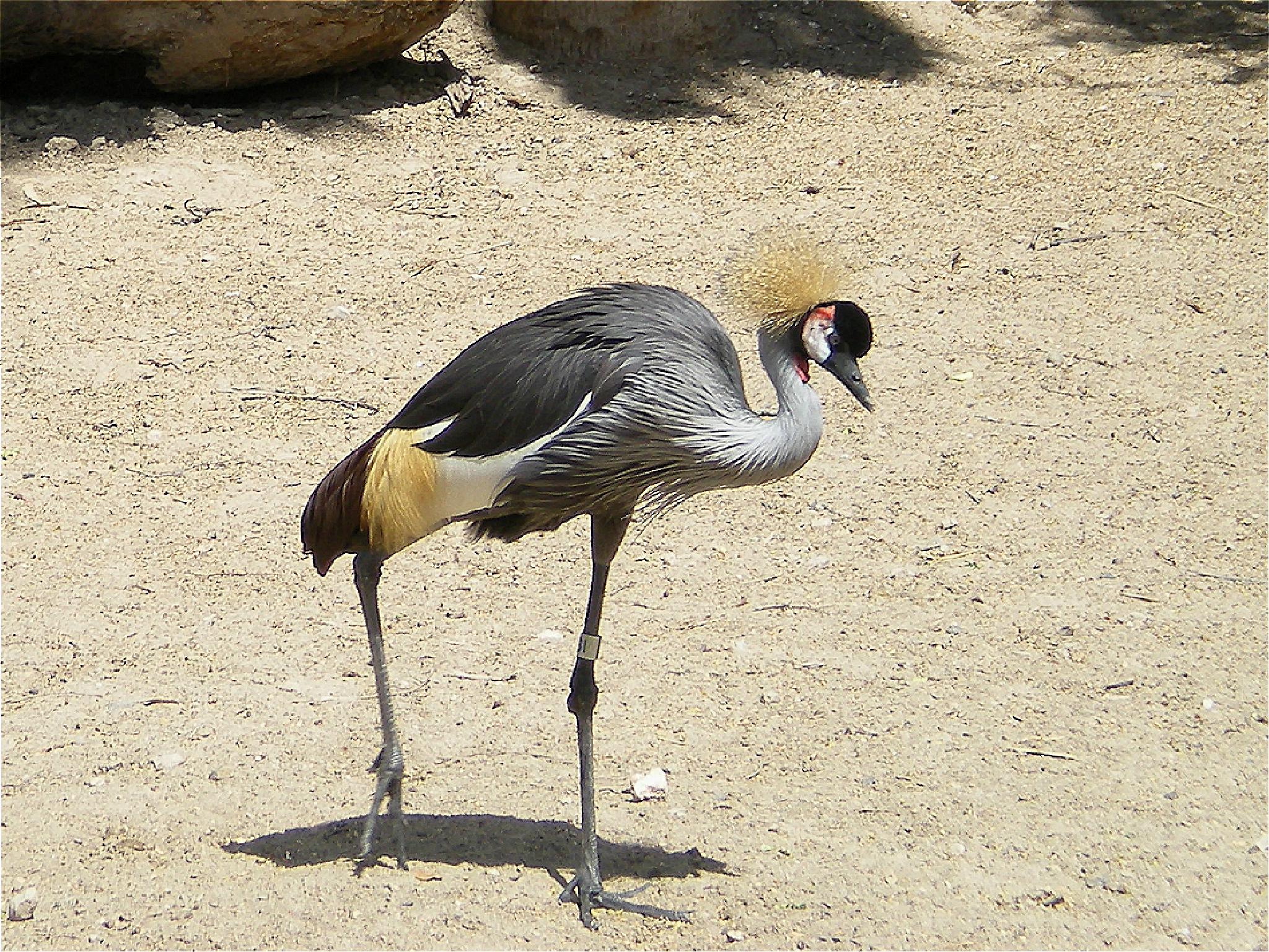 PRETTY BIRD by bechcomber444