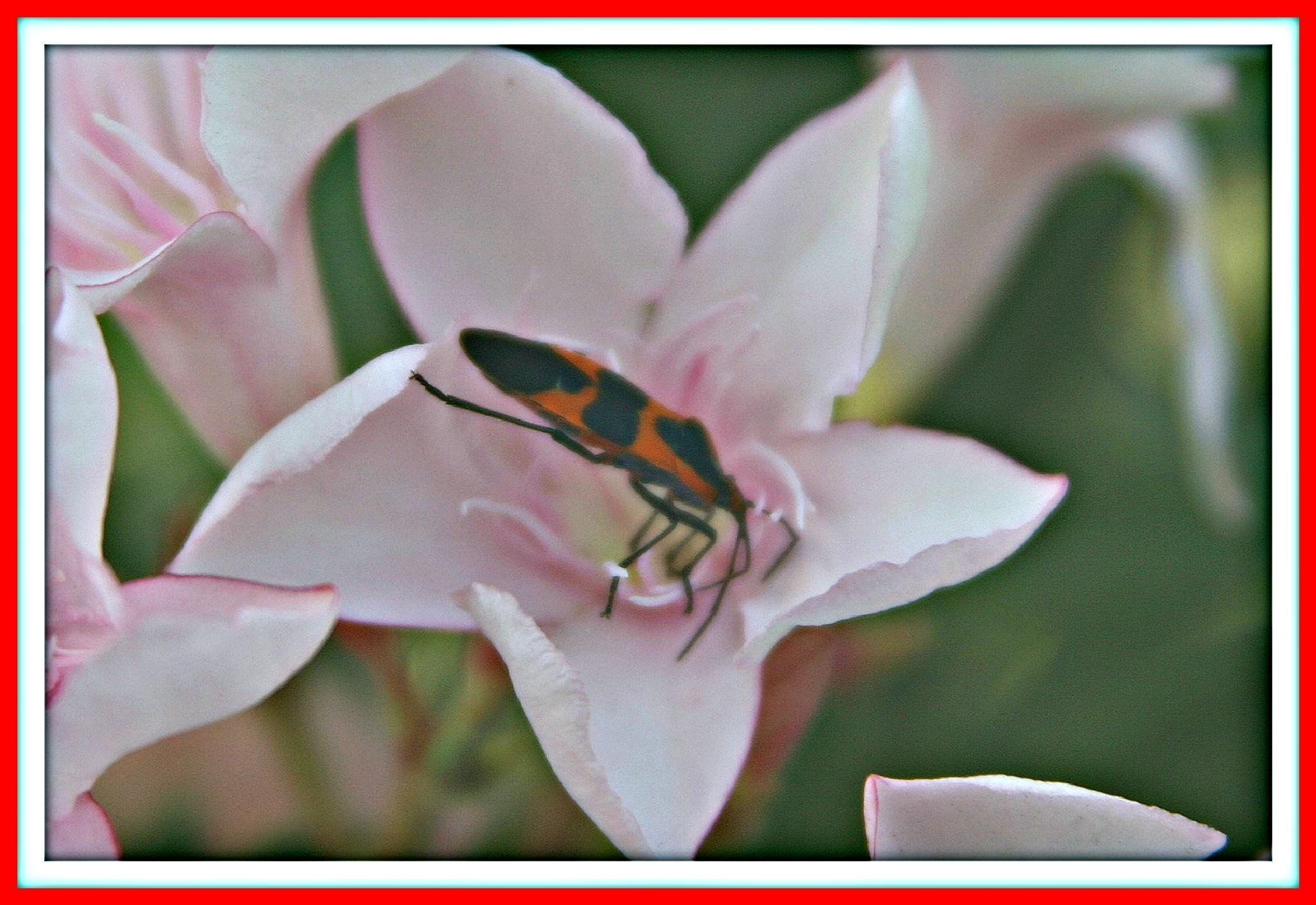 LOVEBUG IN FLOWER by bechcomber444