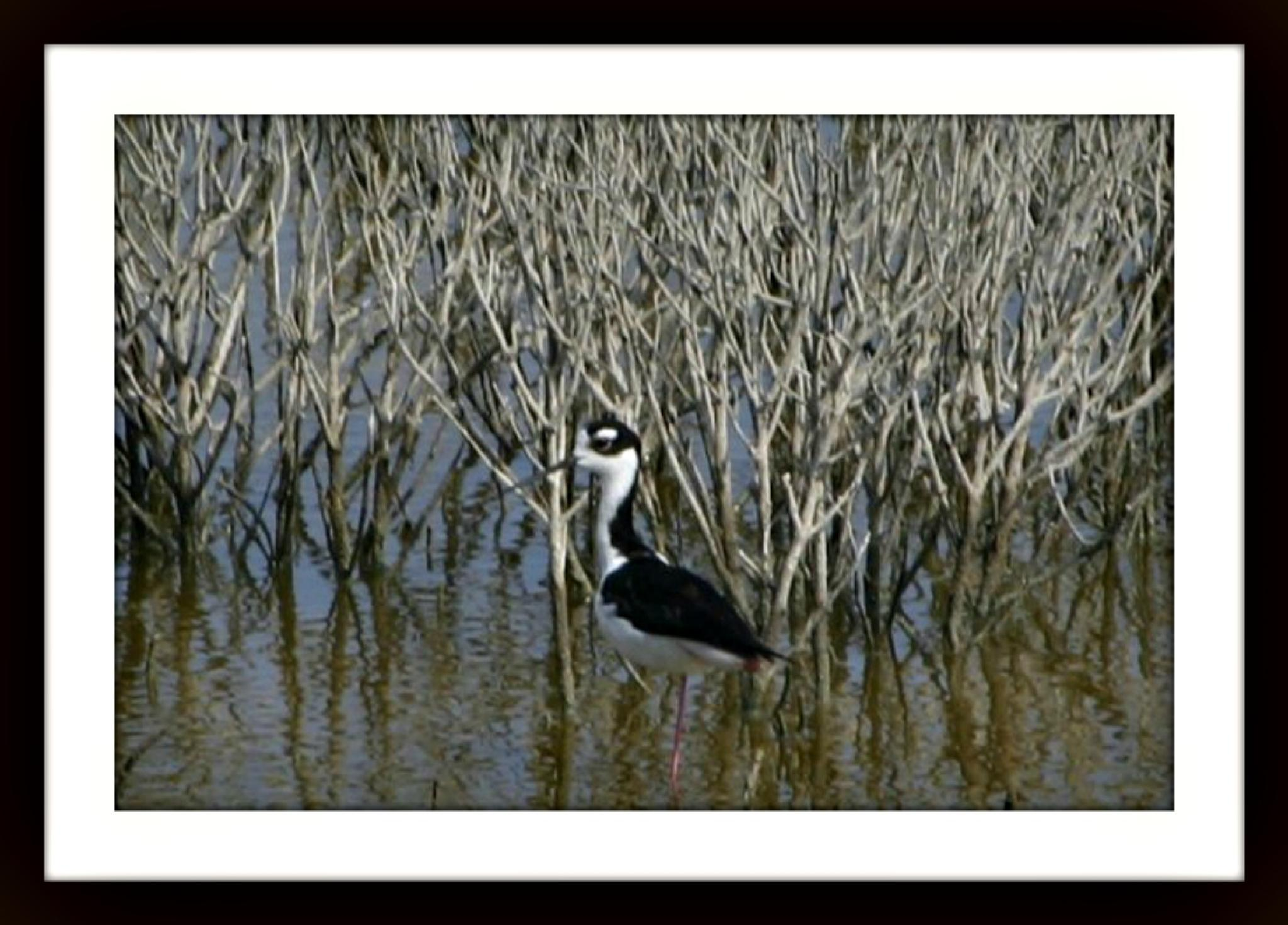 WATER BIRD by bechcomber444