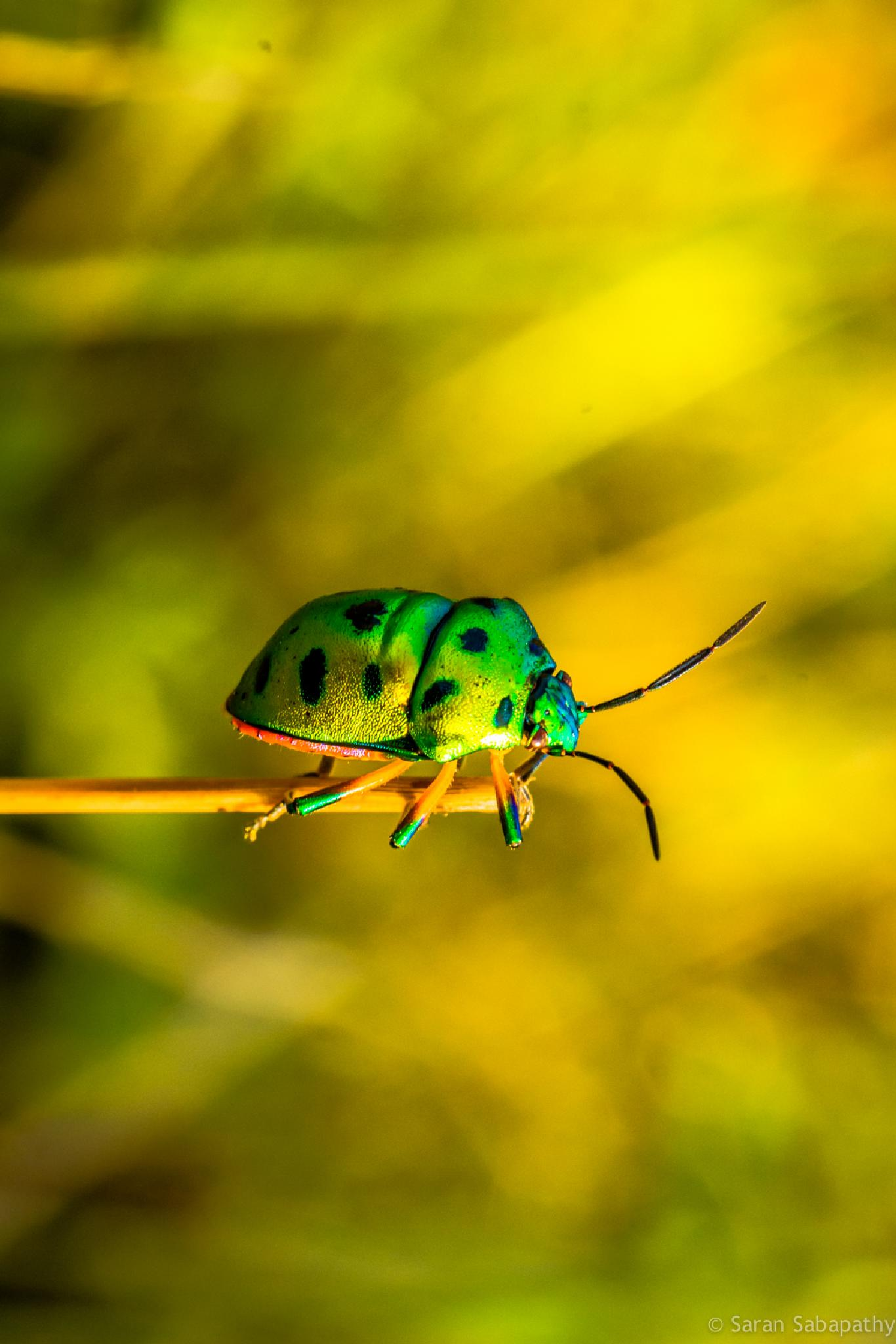 Photo in Macro #bug #insect #nature #macro #nikon #macrophotography #bangalore