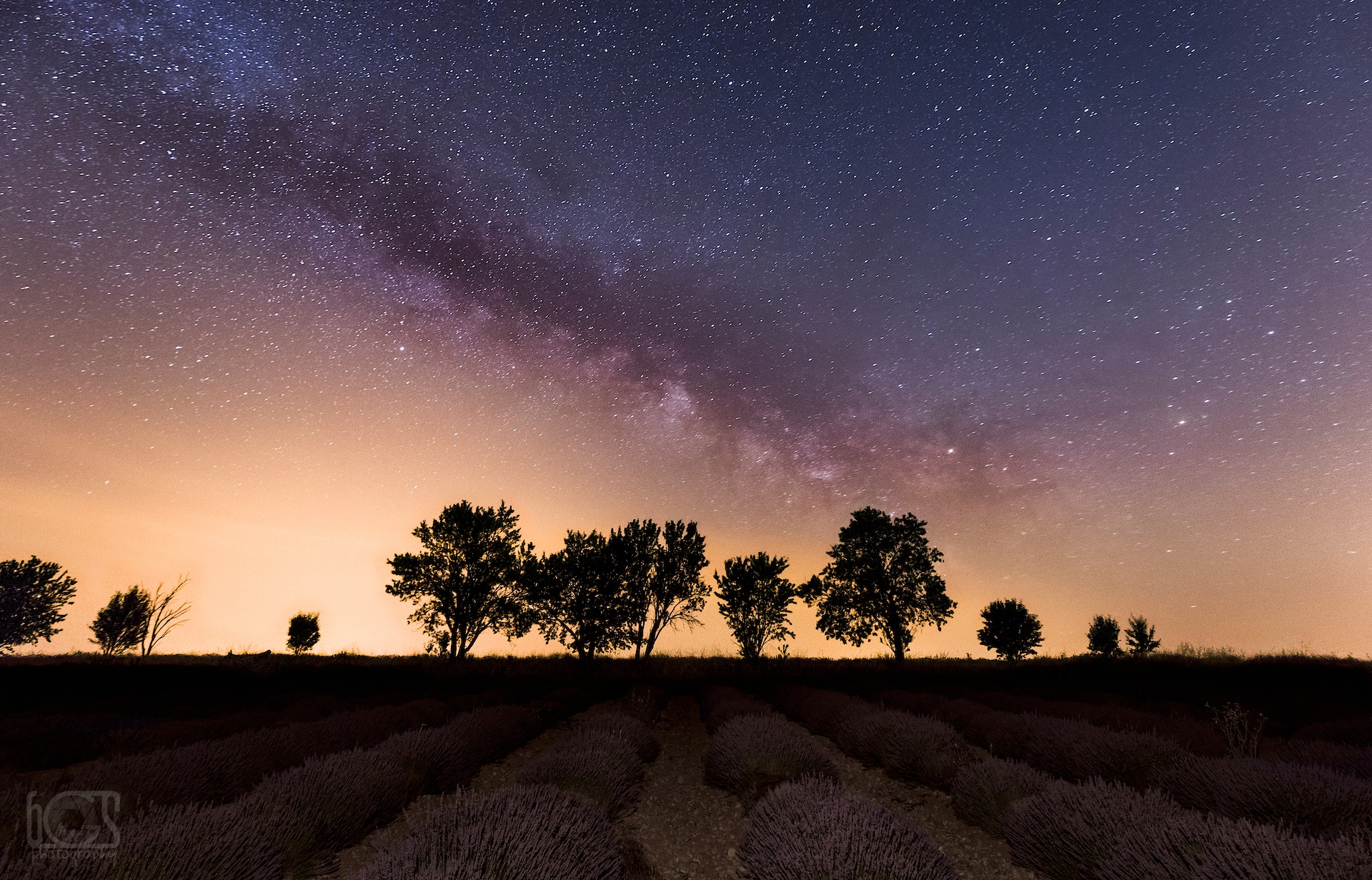 A night with lavenders by bgs Photography