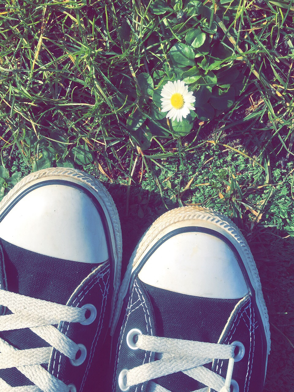 Hello flower by AKC