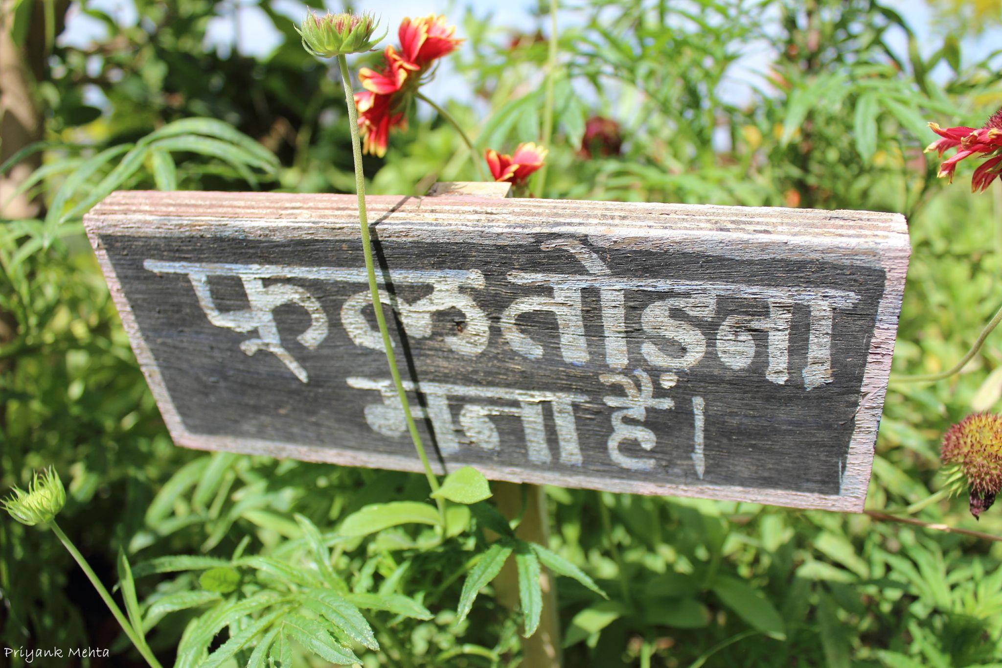 Do not pluck flowers by Priyank J Mehta