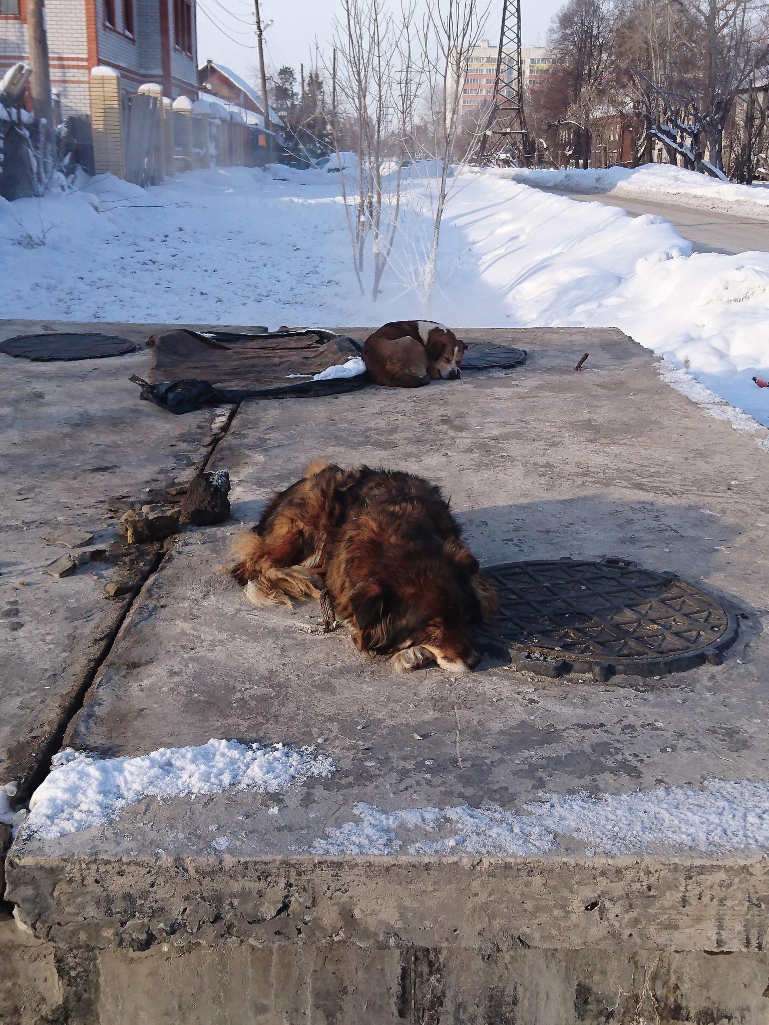 Dog Life by cacaceg73