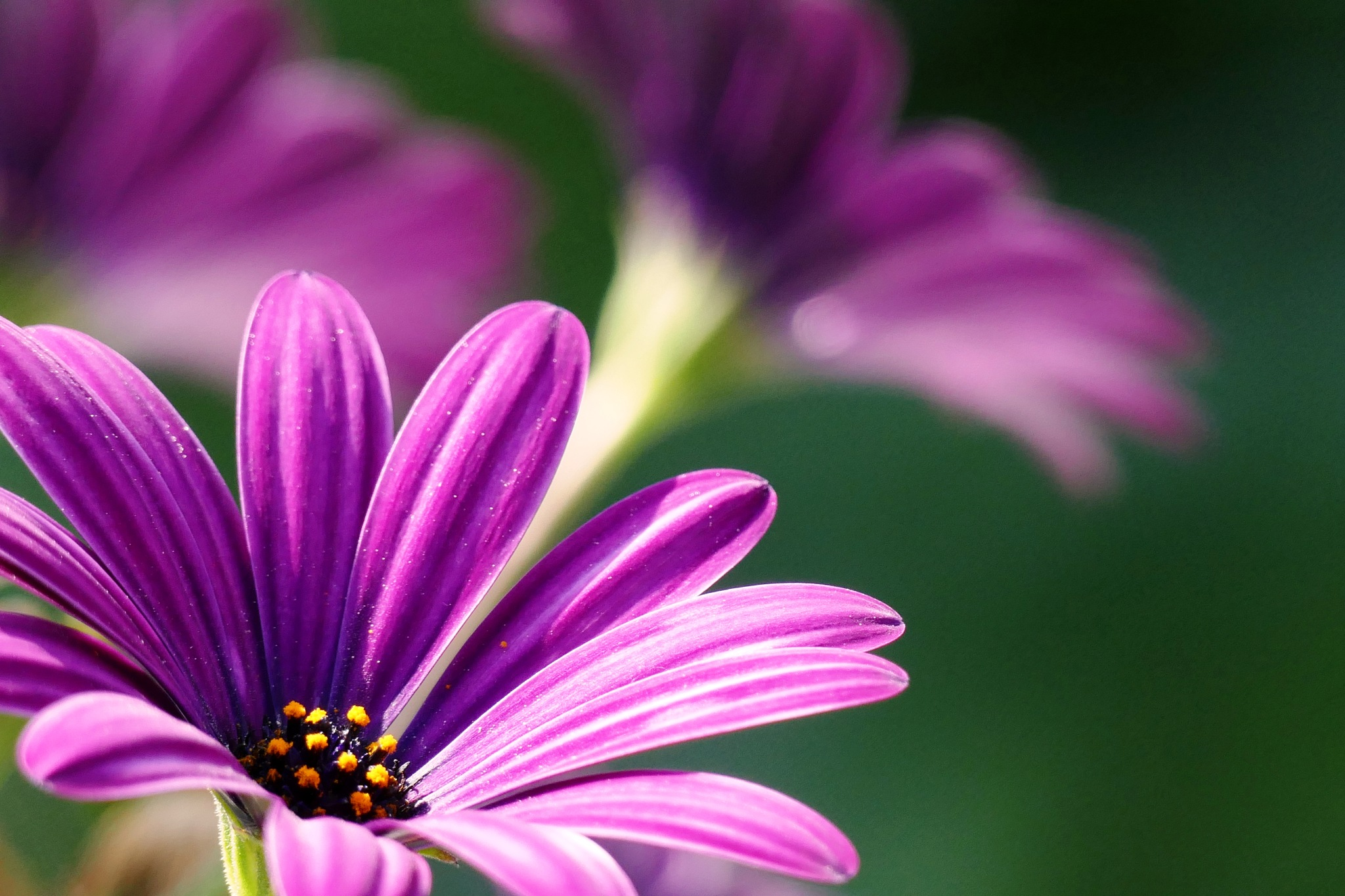 focus on flowers by JOSEPH MAZZUCCO
