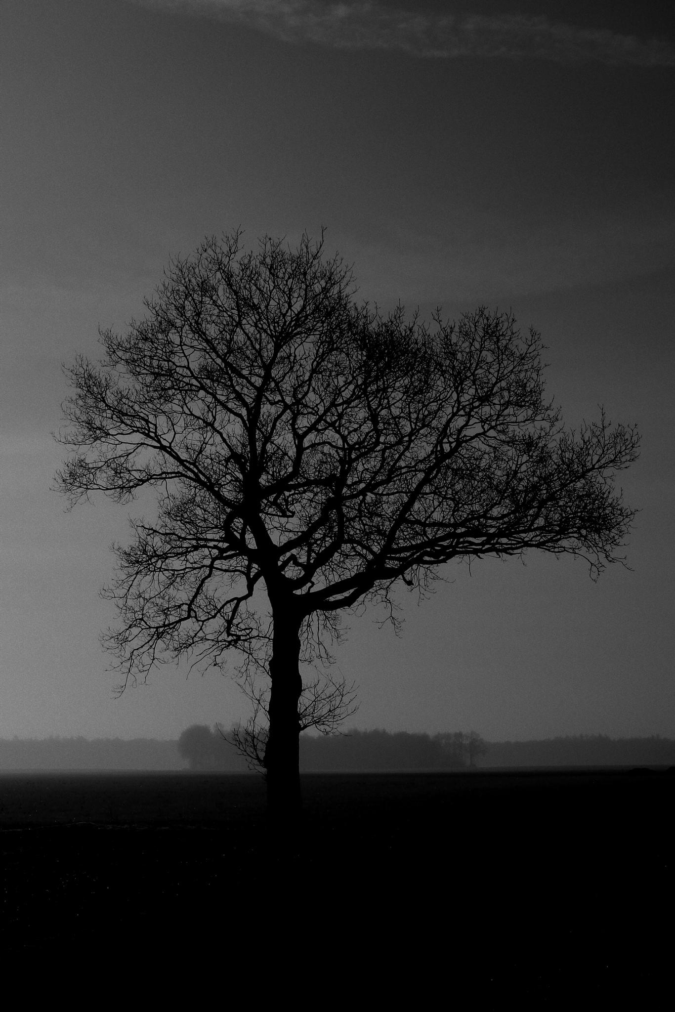 Tree... by Robert