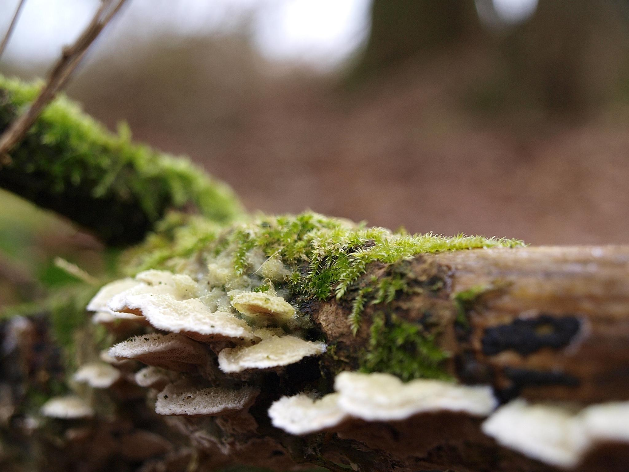 Fungi and moss... by Robert