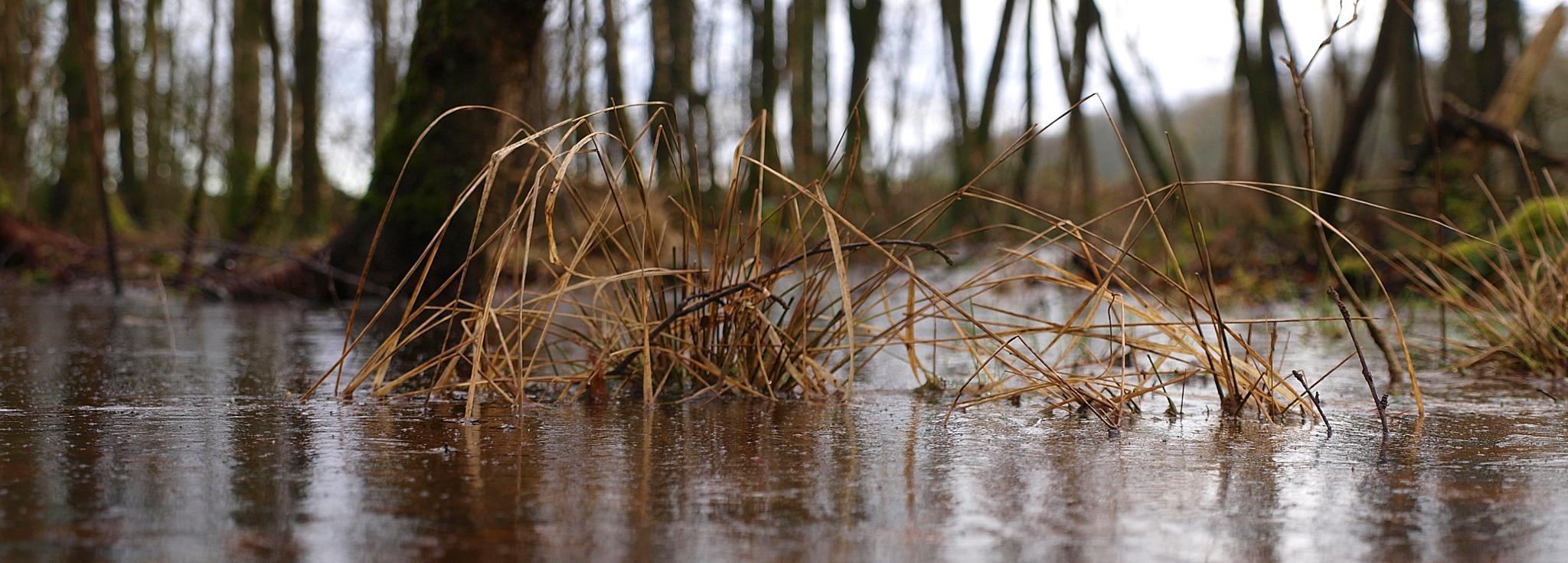 grass through ice.. by Robert