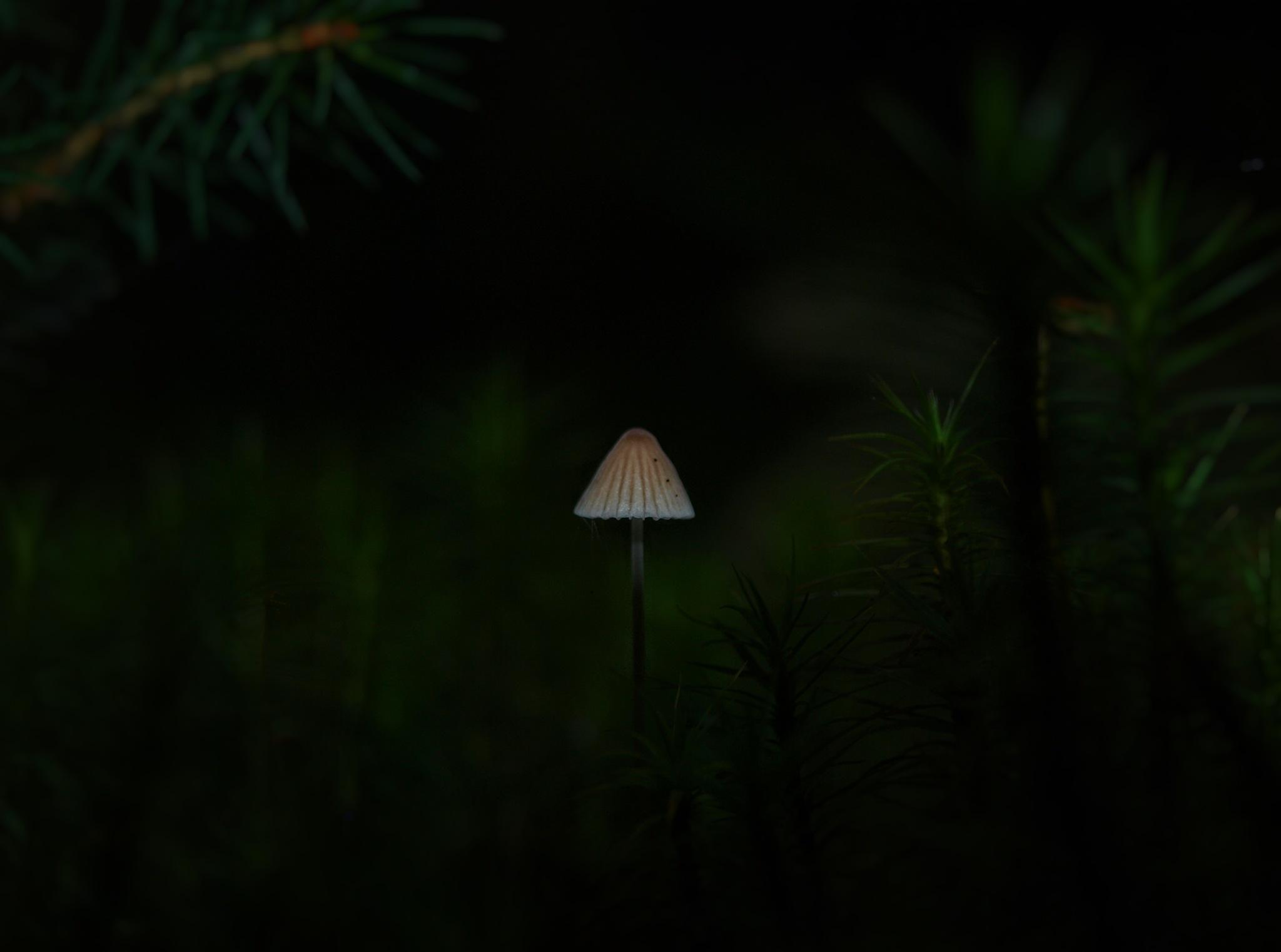 Alone... by Robert