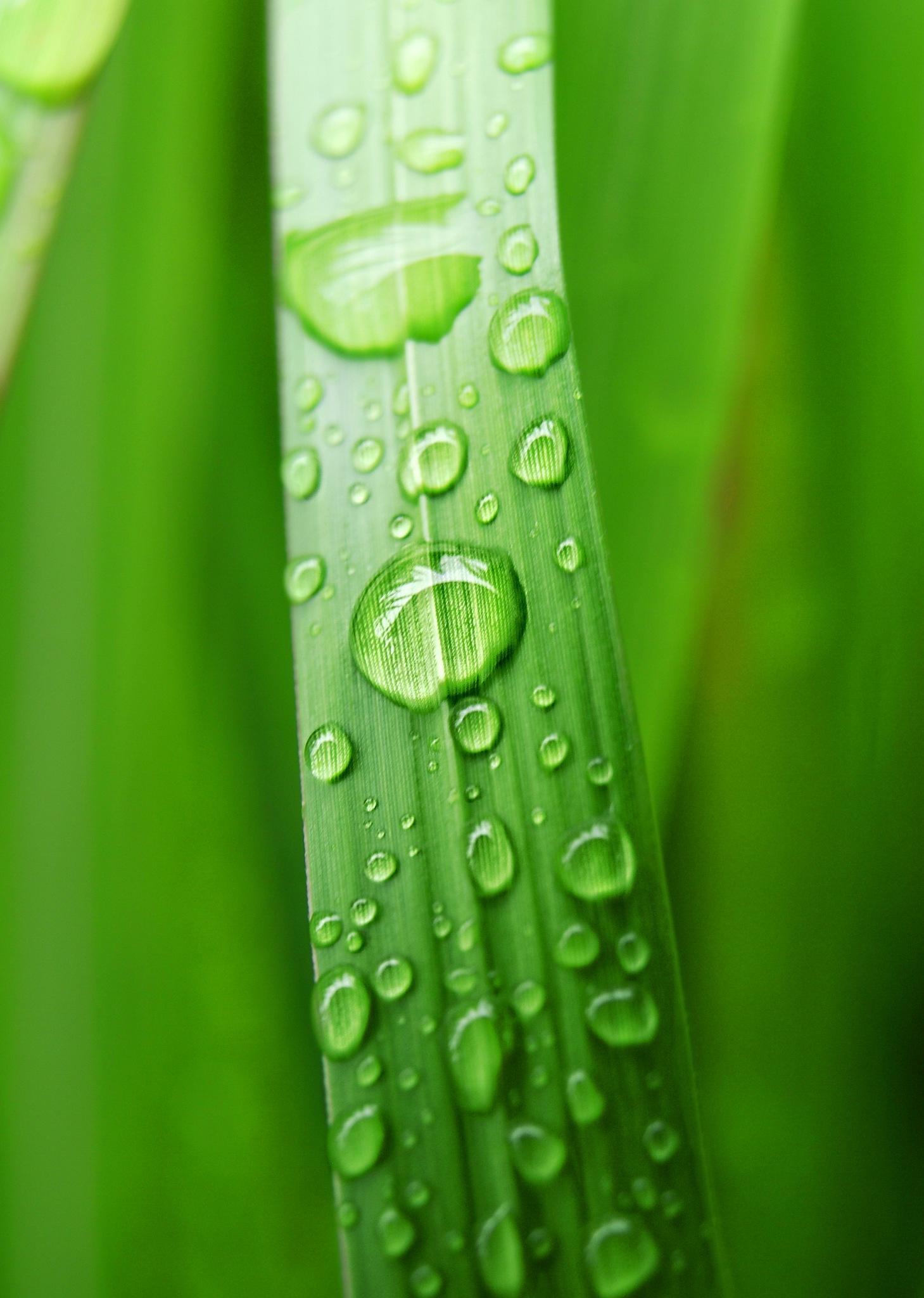 Green... by Robert