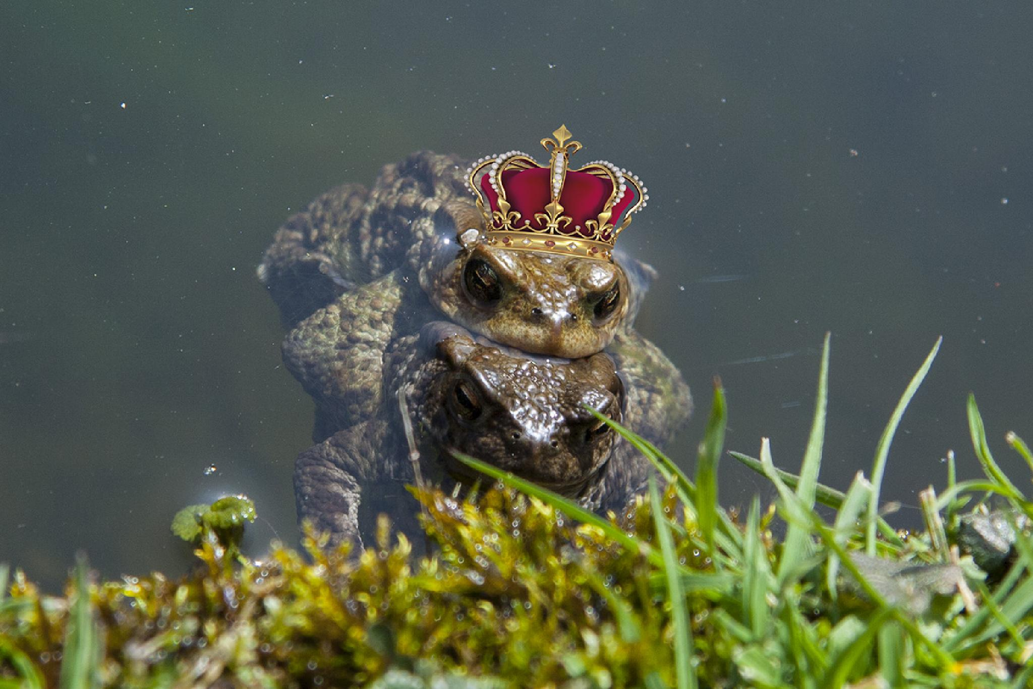 mating princes? by harald.seiwert