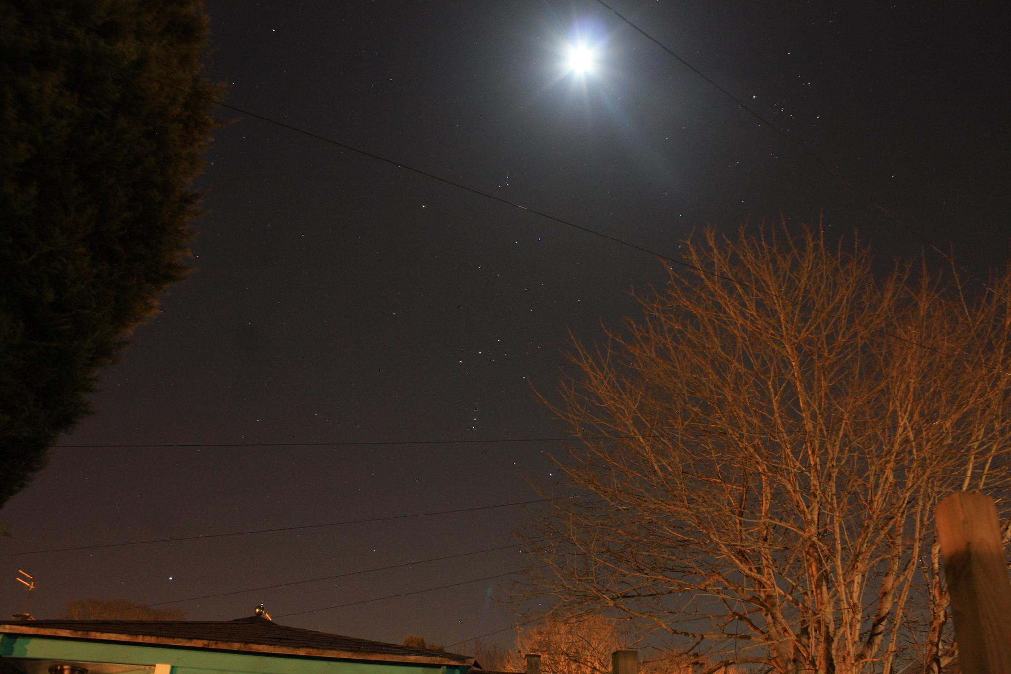 The Moon & the Tree by smithlinton