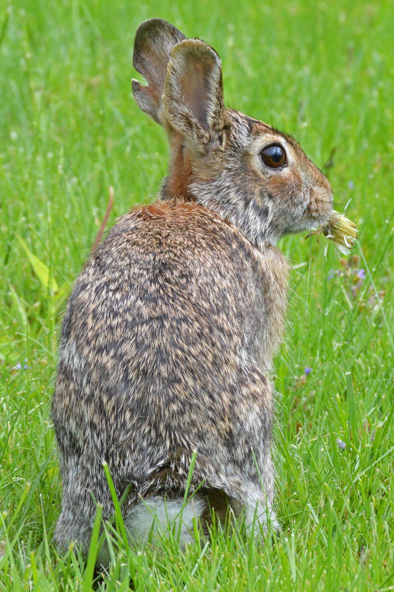 Cute Bunny by Bill B.