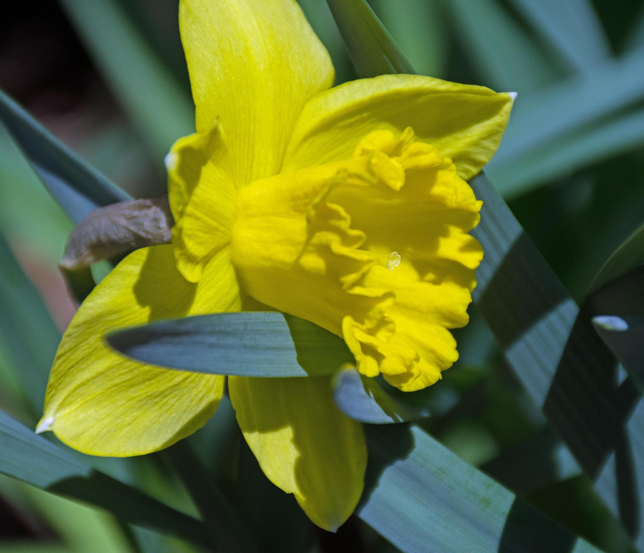 Spring 2 by Brady Williams