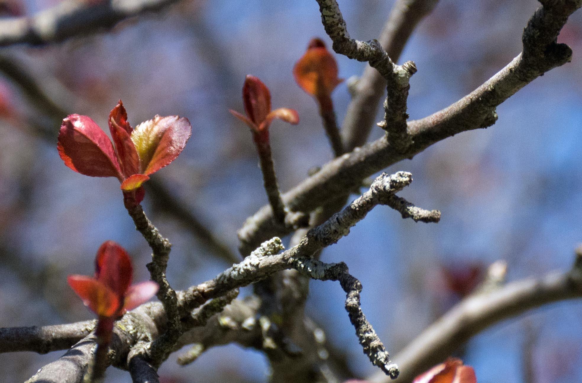 Spring 3 by Brady Williams
