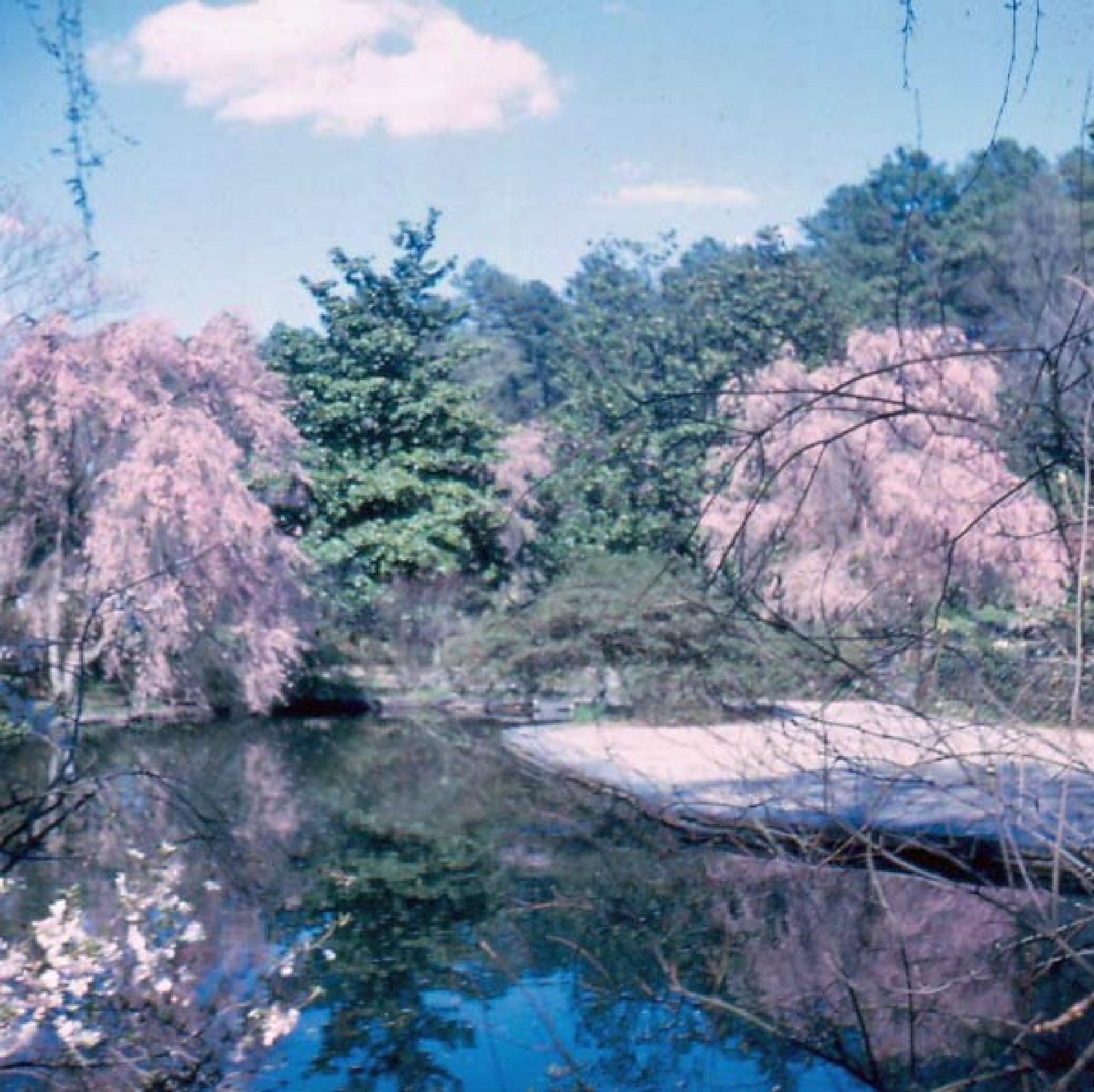 Duke Gardens by Brady Williams