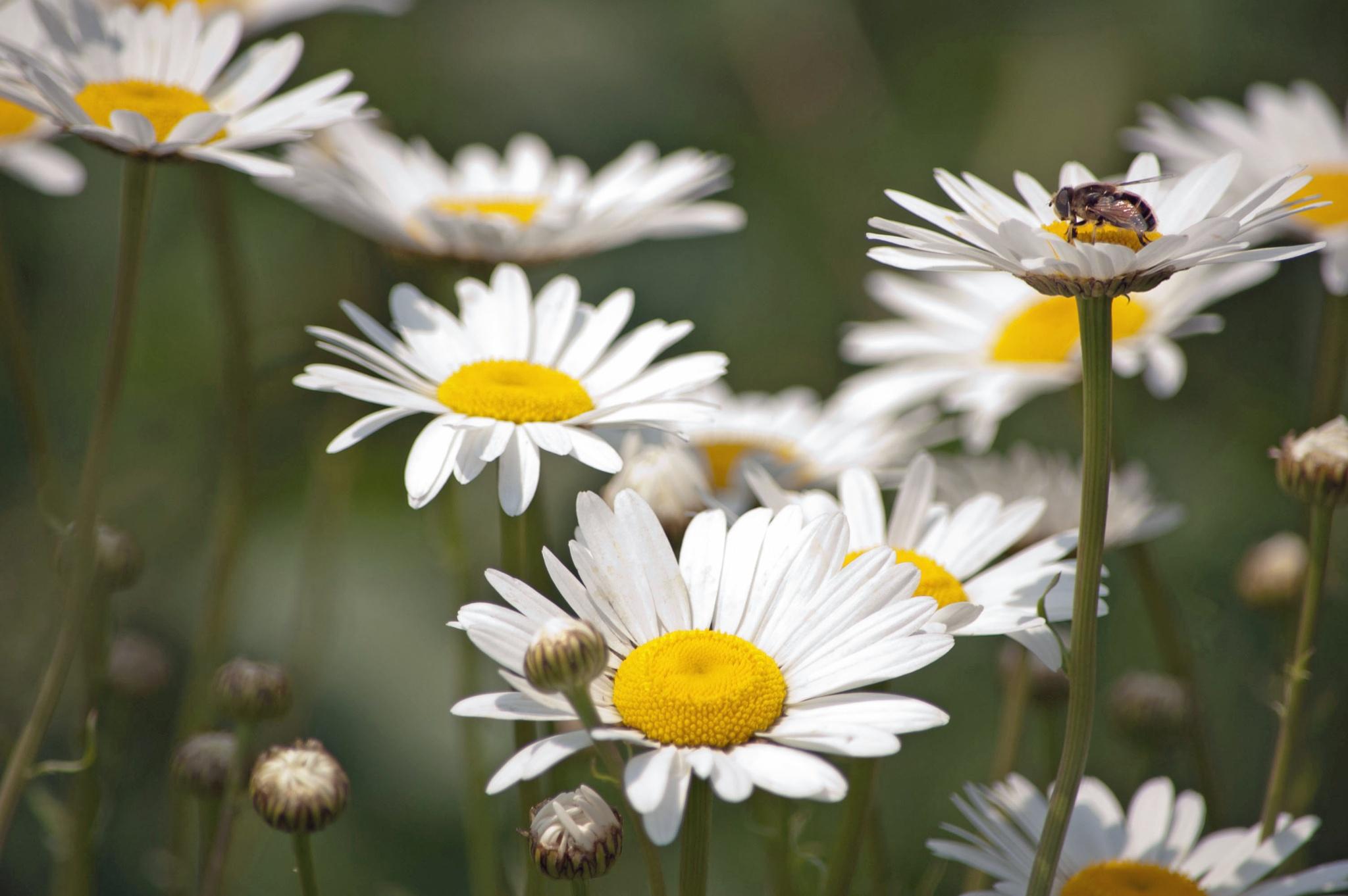 So Many Flowers, So Few Bees by Brady Williams