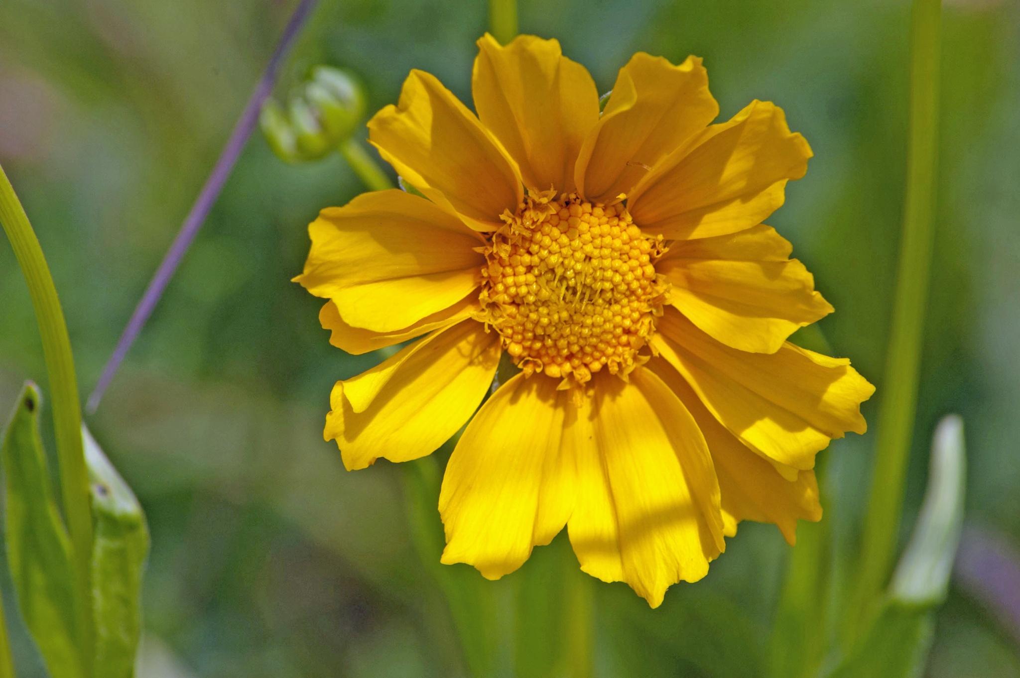 Sunflower 4 by Brady Williams