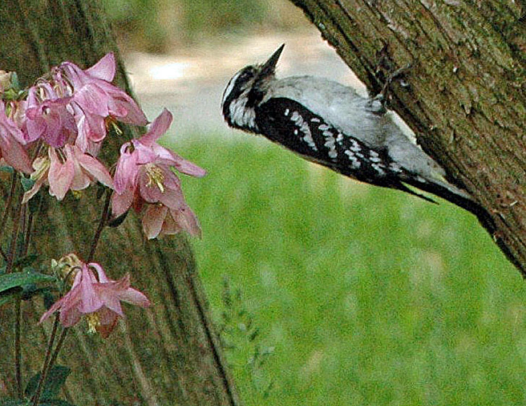 Downy Woodpecker by Brady Williams