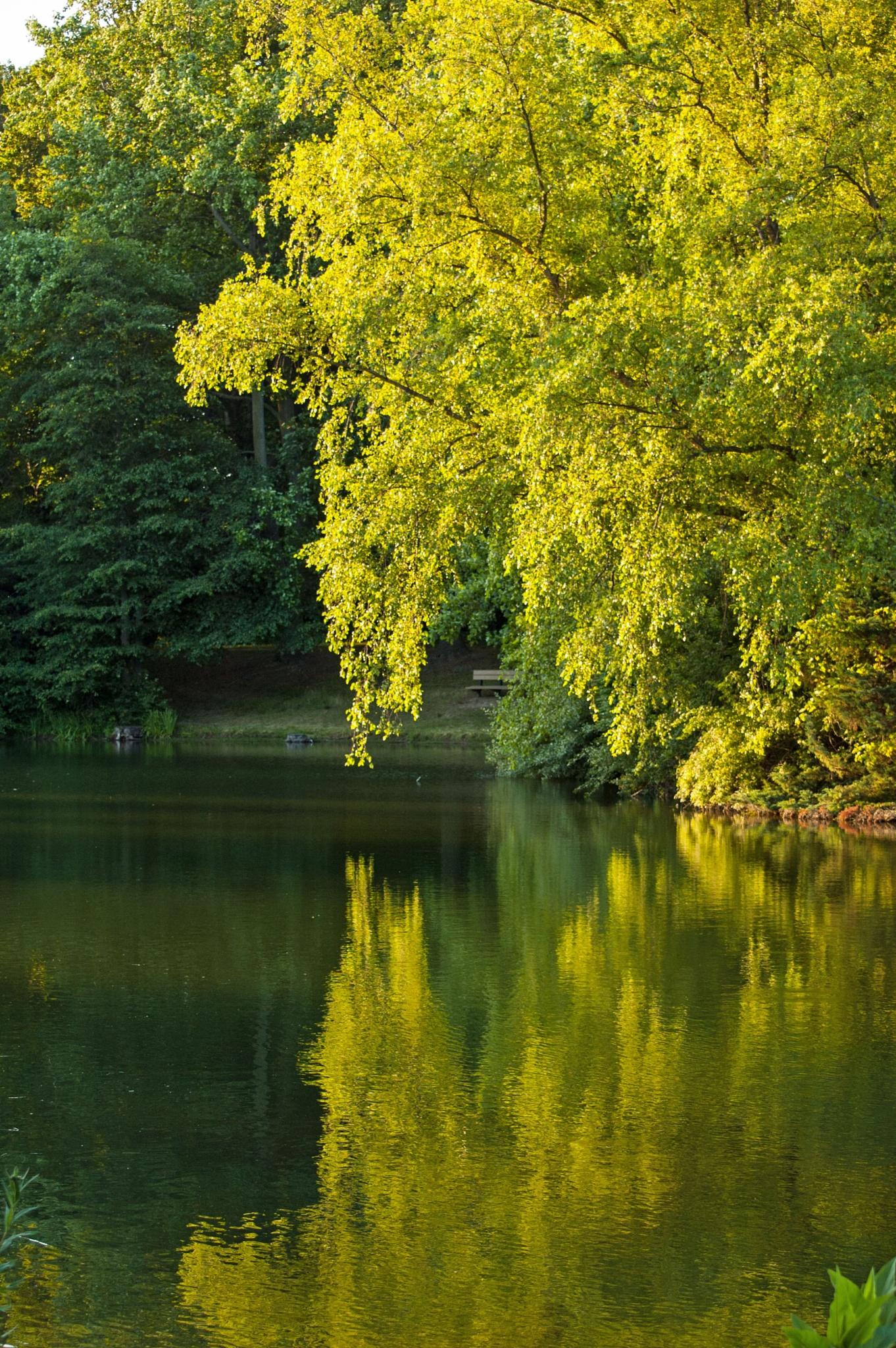 Pond by Brady Williams