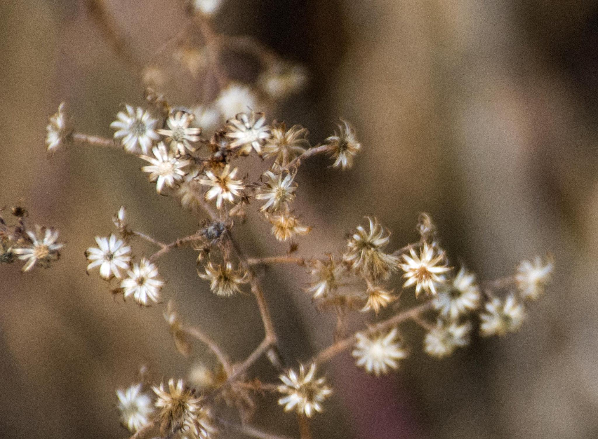 Dried Flowers by Brady Williams