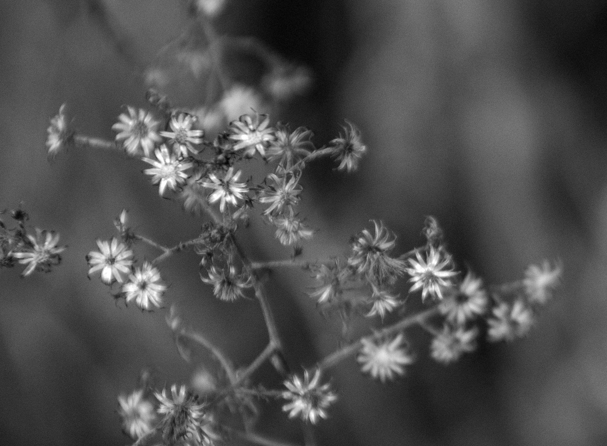 Wildflowers, B&W by Brady Williams