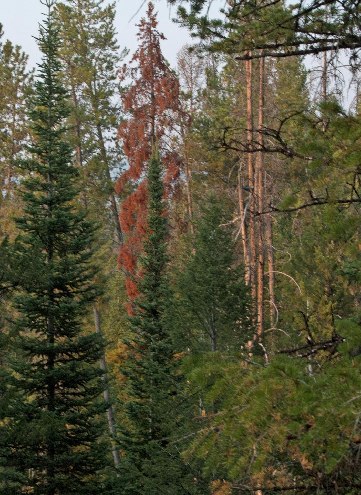 Tall Timber by Brady Williams
