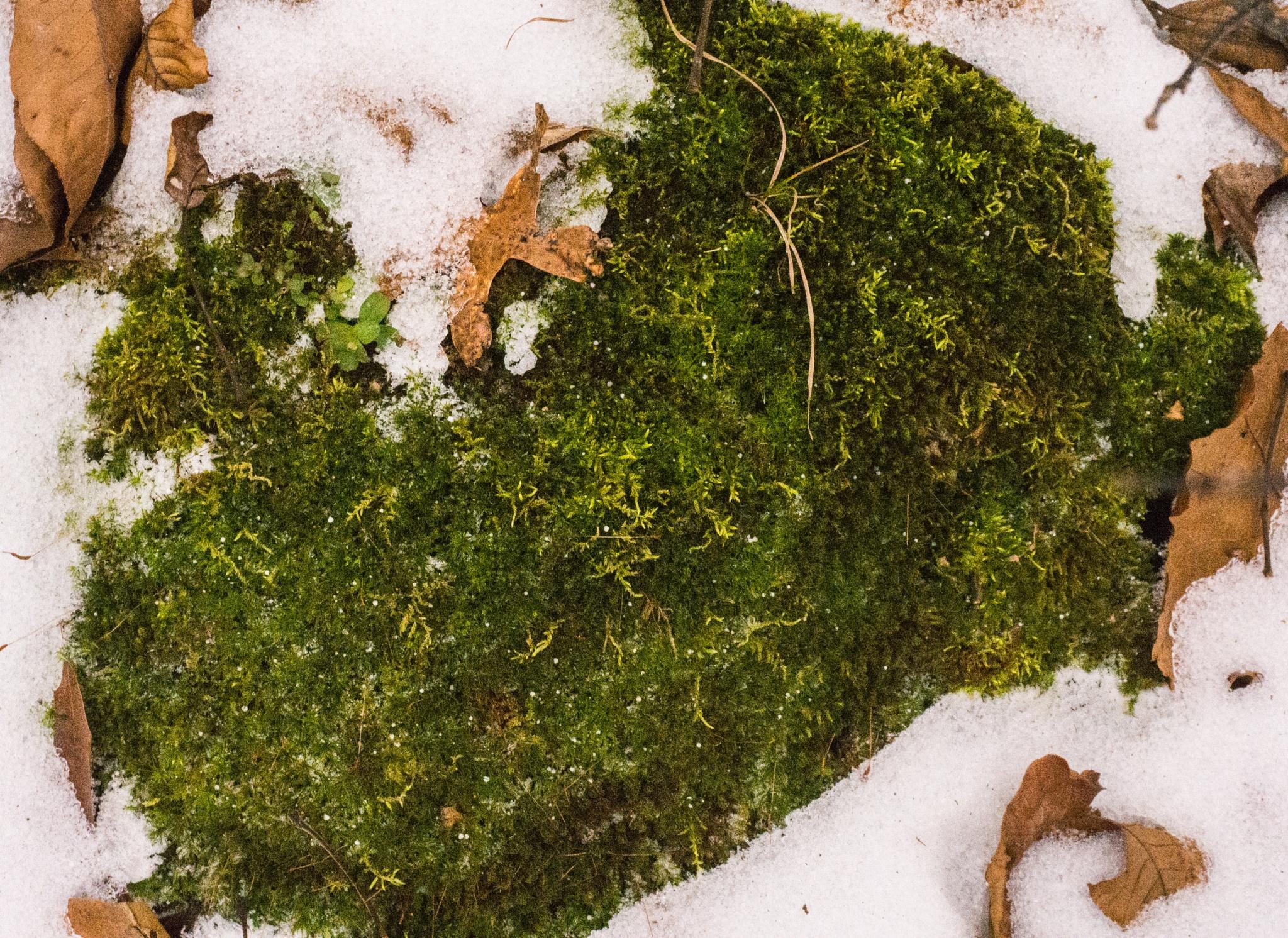Moss by Brady Williams