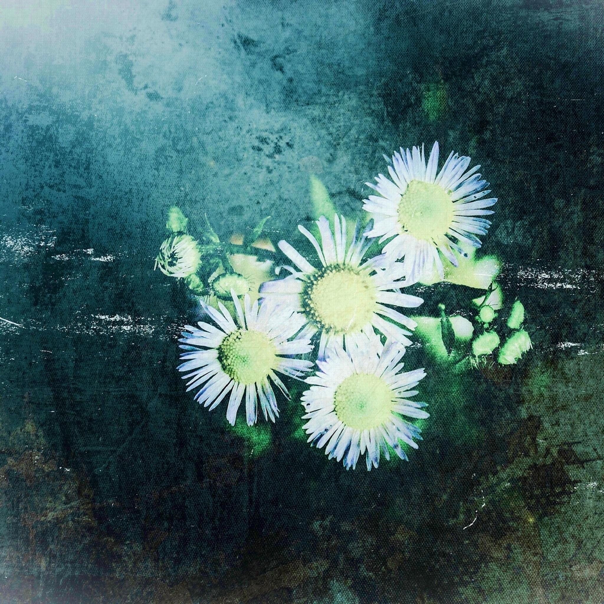 Weed. by Tomoya Yamaguchi