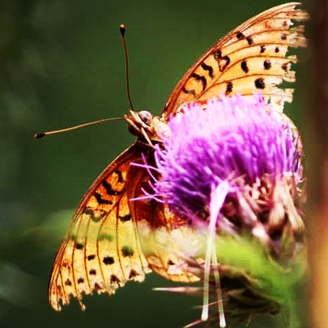 Butterfly by mary.c.bergin.3