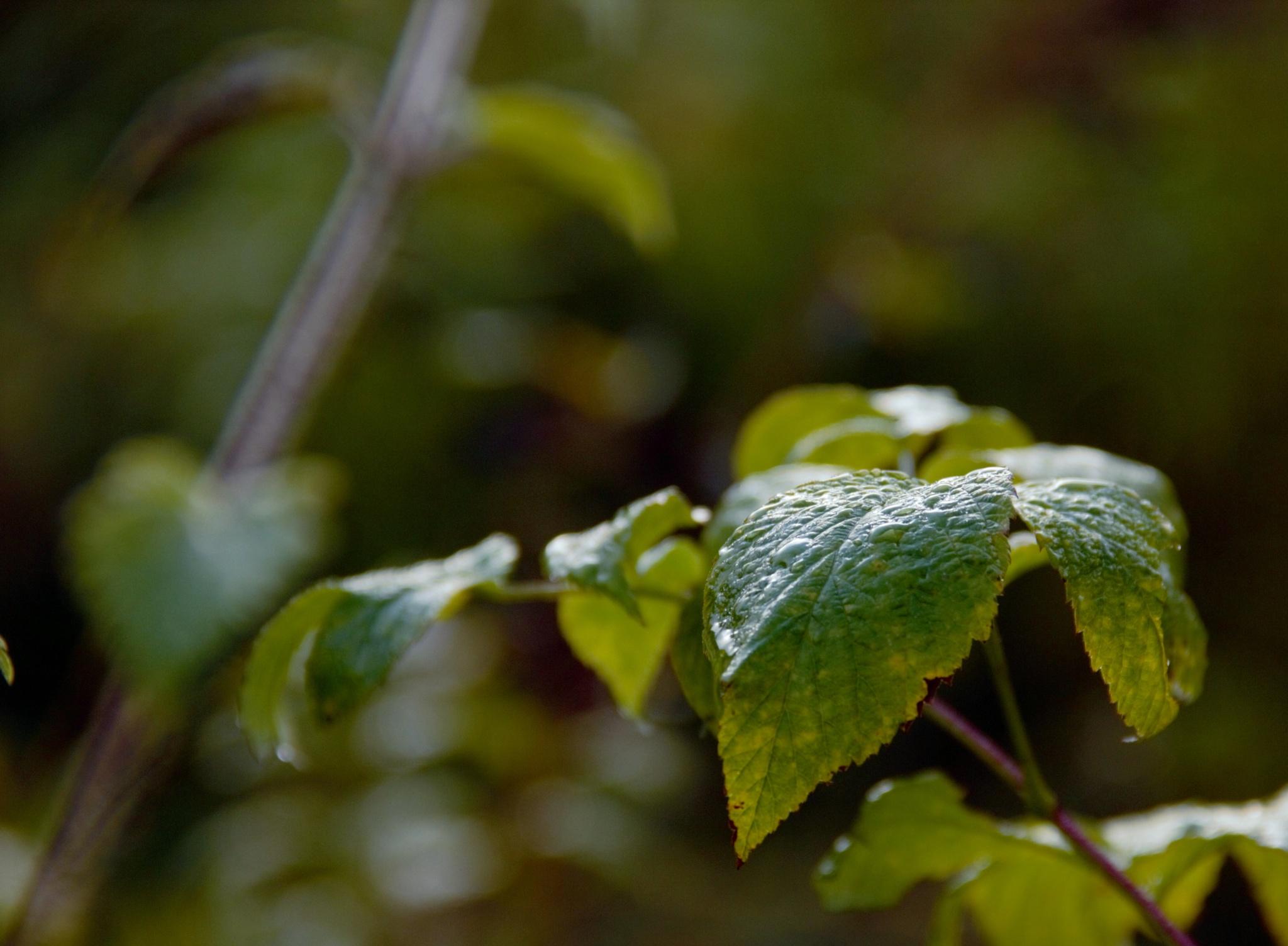 Leaf by erica.roslin