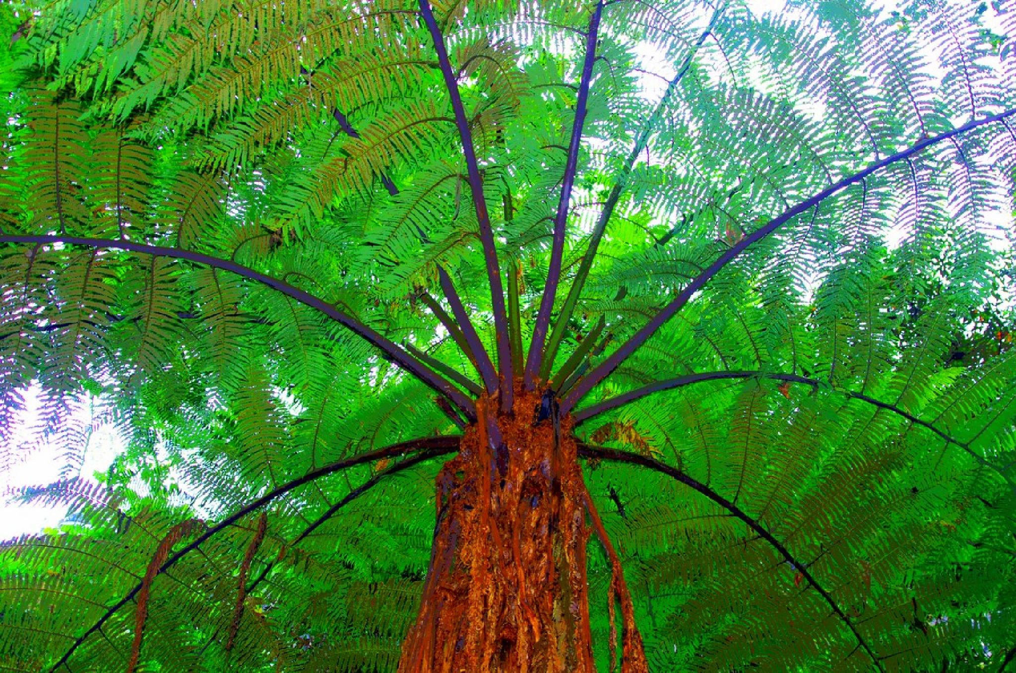 Giant fern of the Andes by Dan Steeves