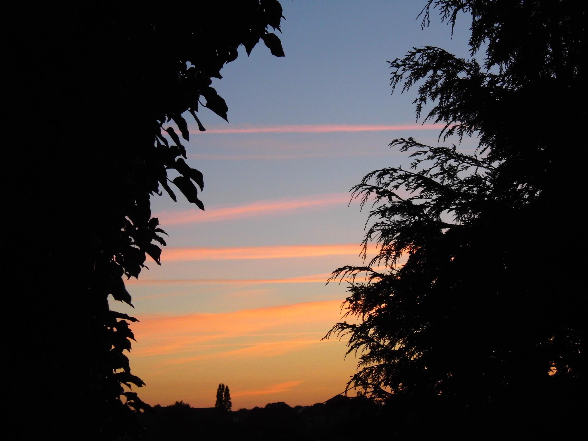 sunrise by Naomi D Tillotson-Keating