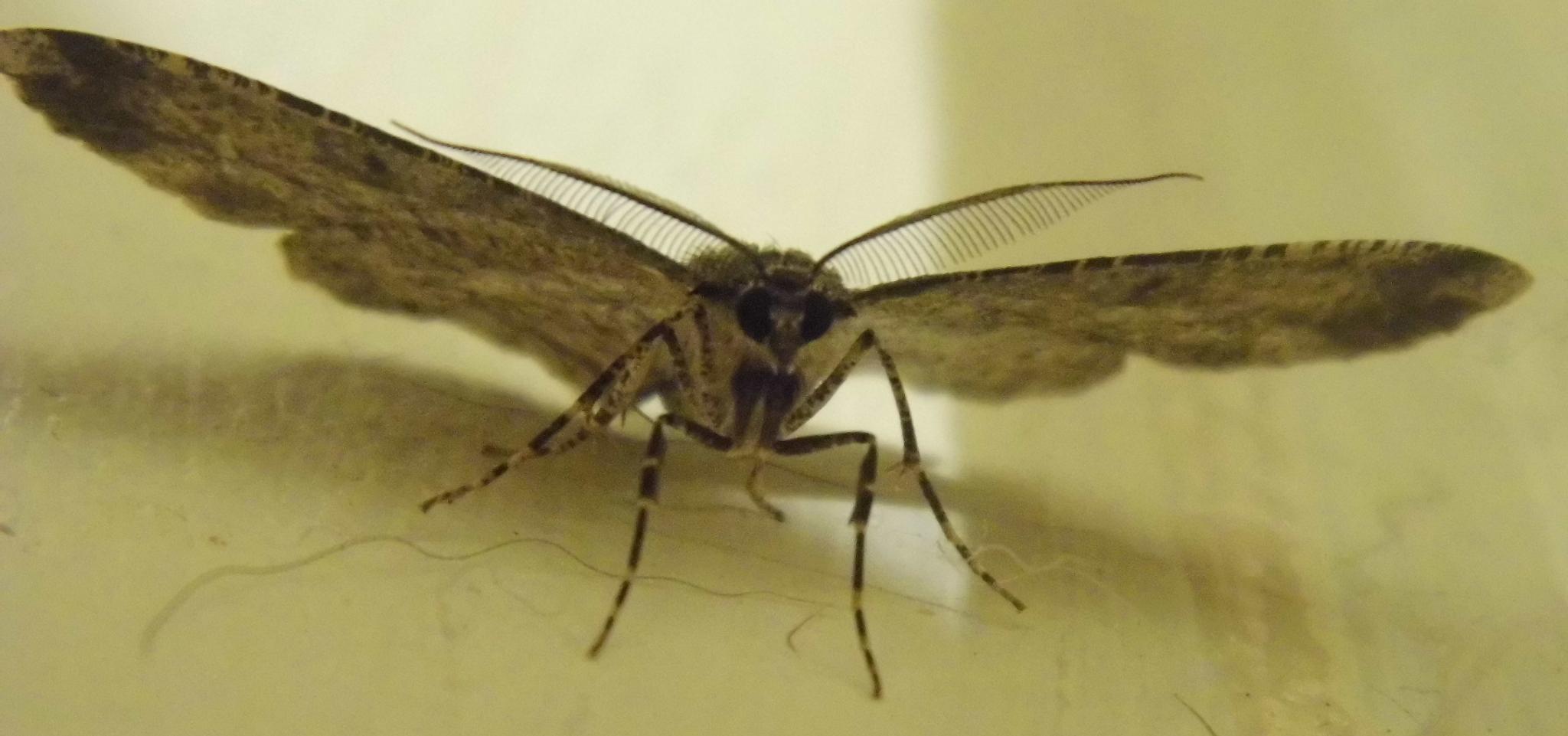 Moth by Naomi D Tillotson-Keating