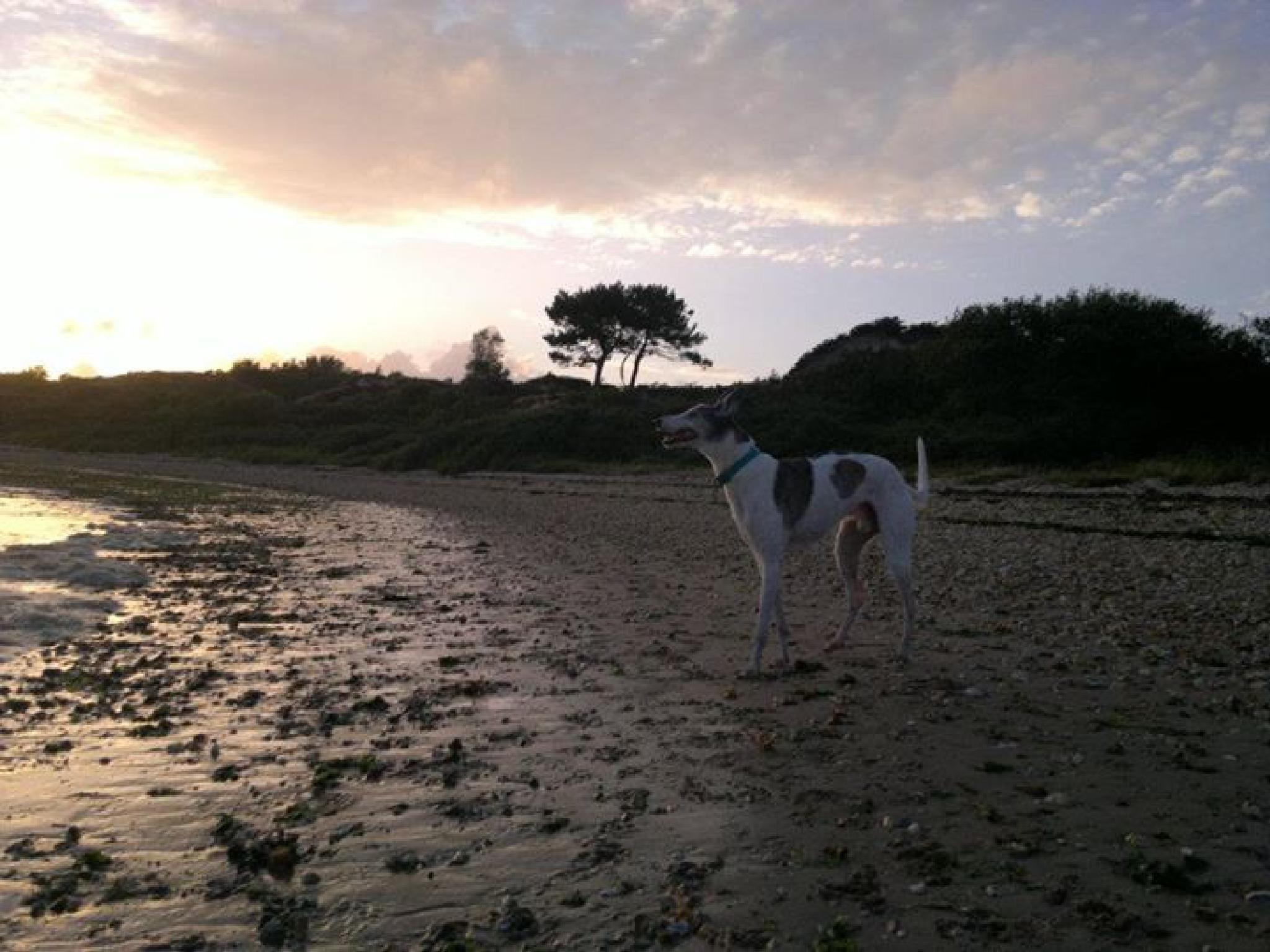 Greyhound on a beach by Naomi D Tillotson-Keating