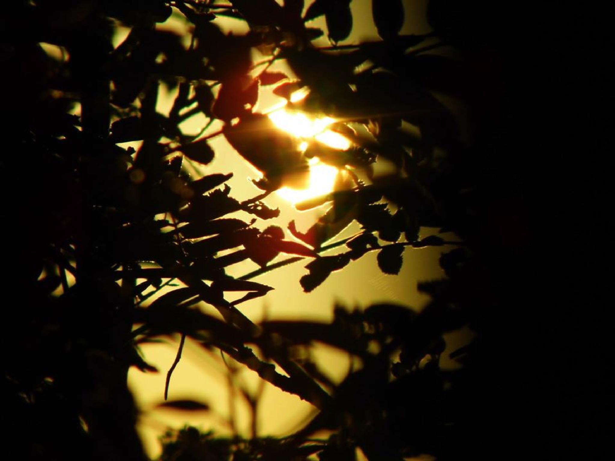 sunrise through trees by Naomi D Tillotson-Keating