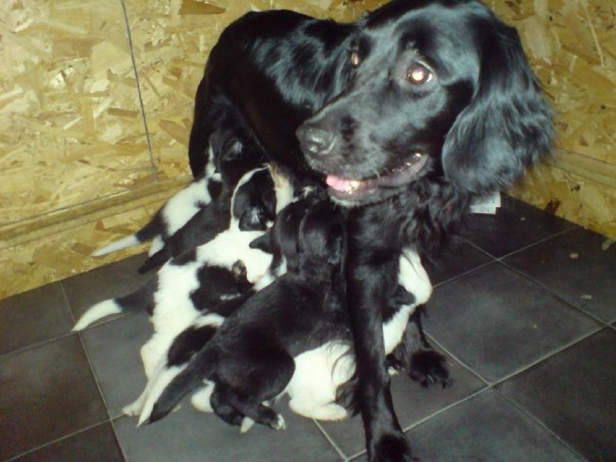 puppies feeding by Naomi D Tillotson-Keating