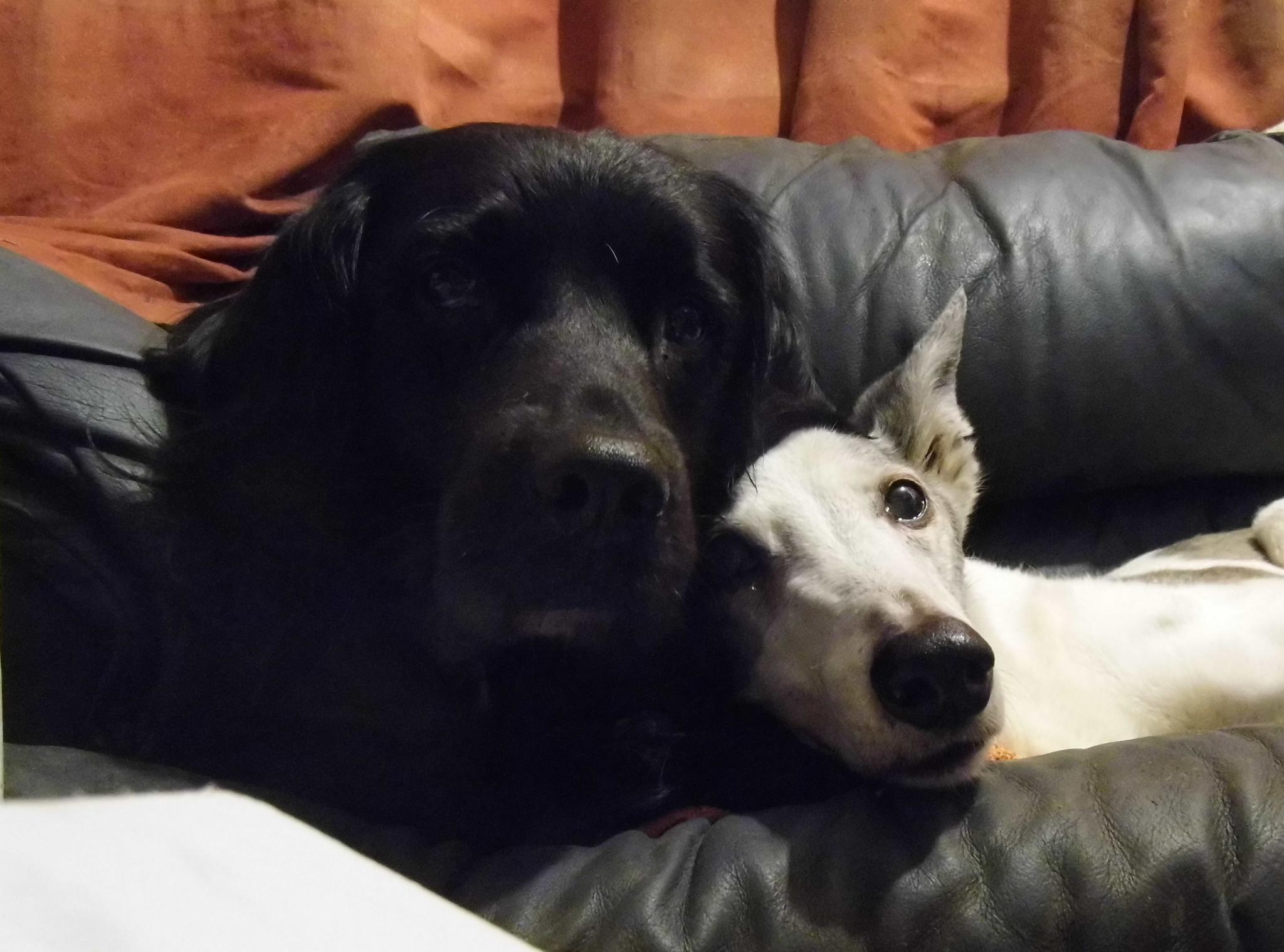 dog parents cuddle by Naomi D Tillotson-Keating