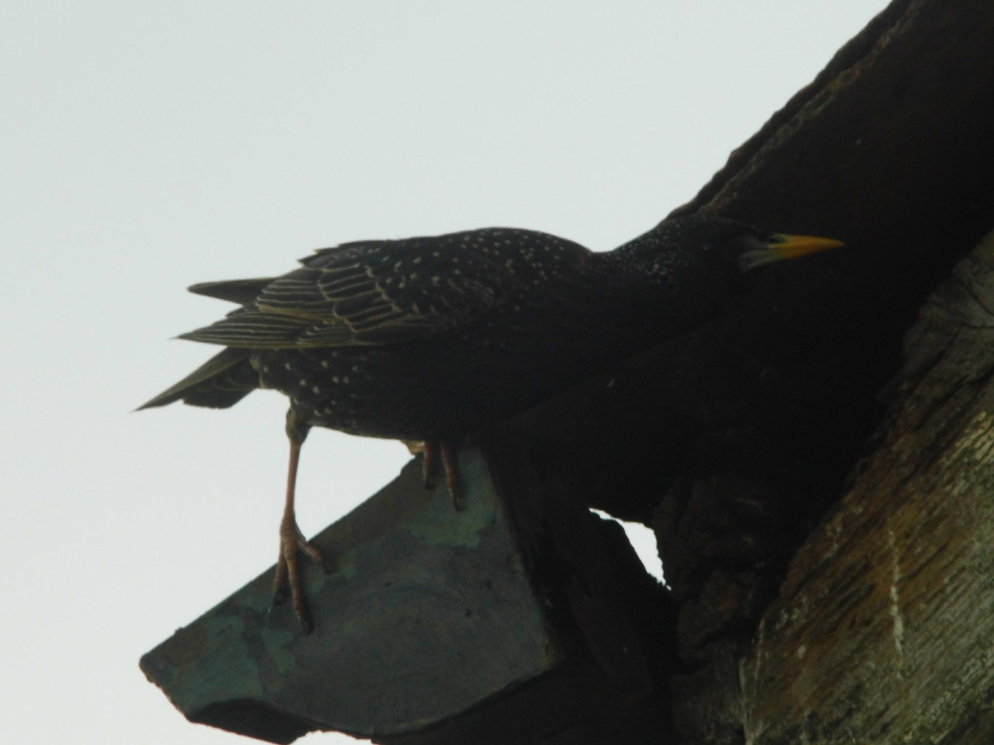 checking the young have fledged by Naomi D Tillotson-Keating