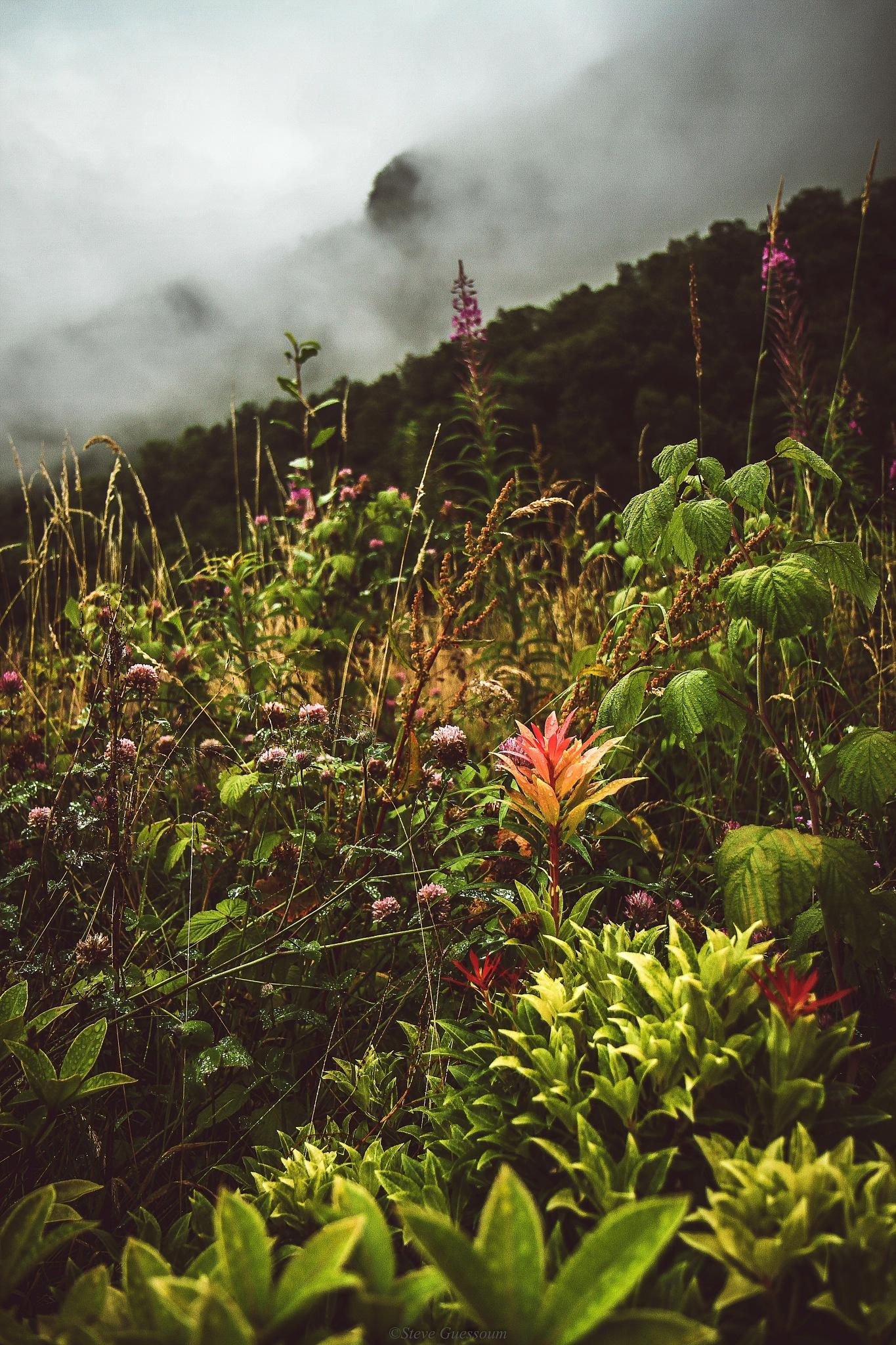 Vikedal Norway  by Steve Guessoum