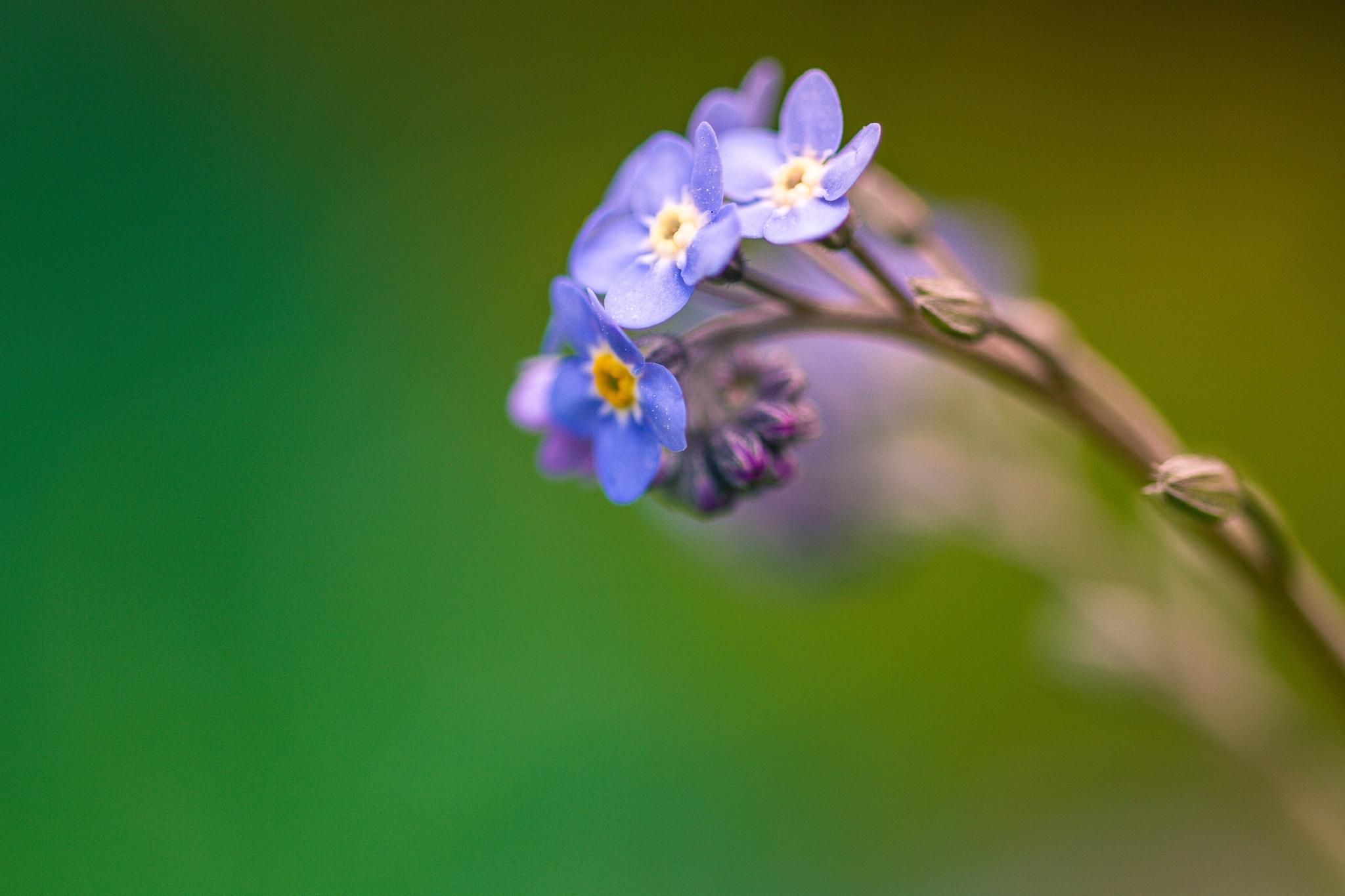 Purple flower against a soft background  by Steve Guessoum