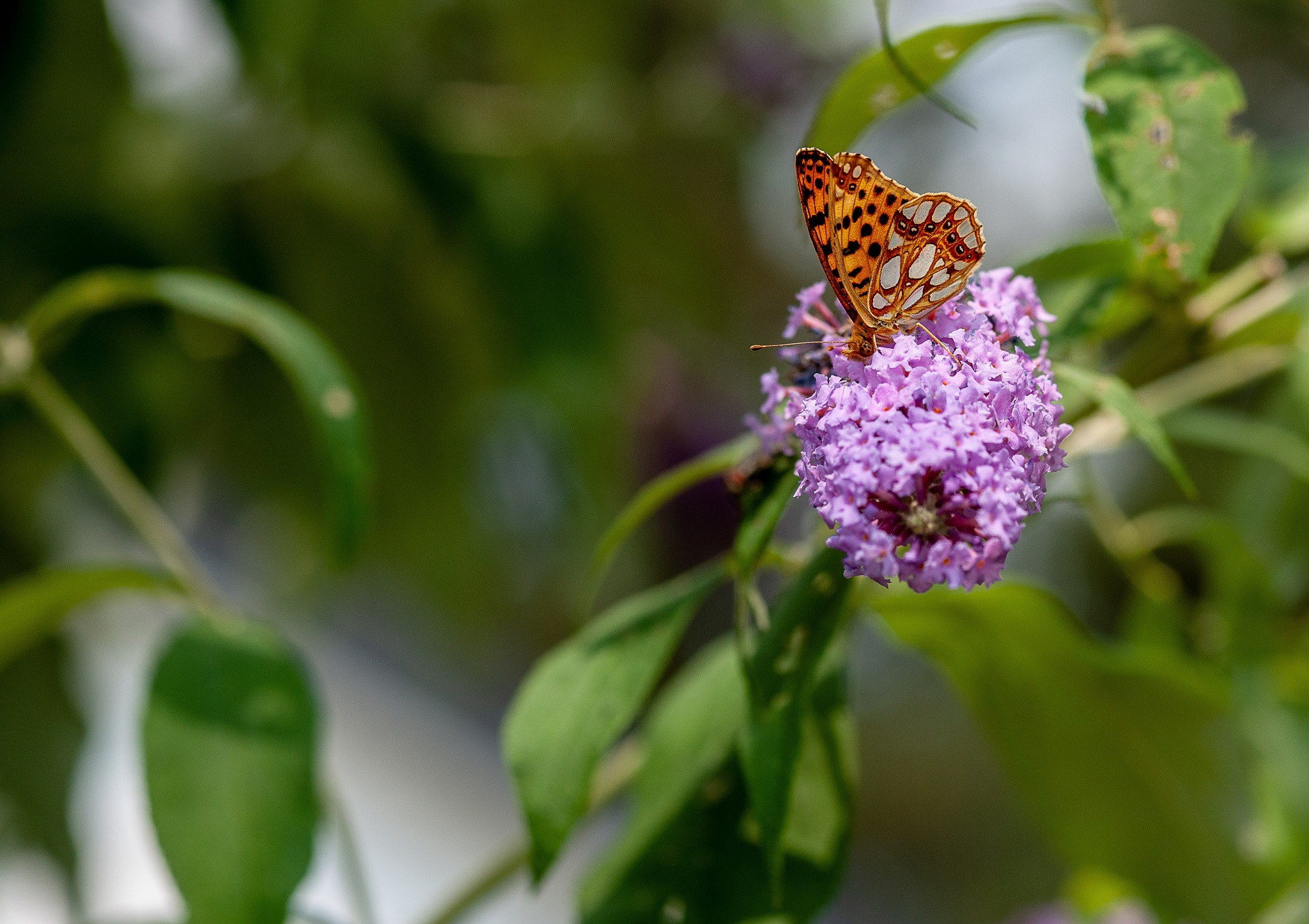 Butterfly against a soft background  by Steve Guessoum