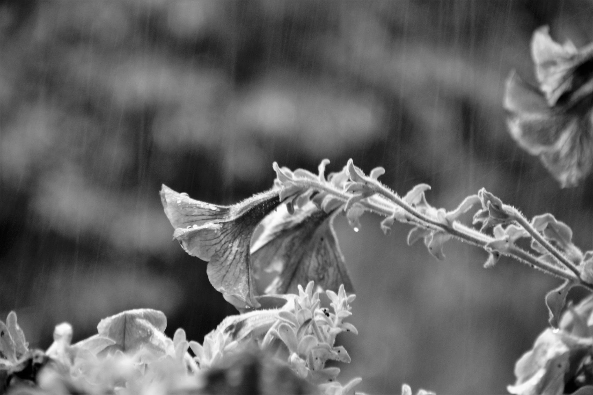#rainyday by Anne Marie Alves-Curcic