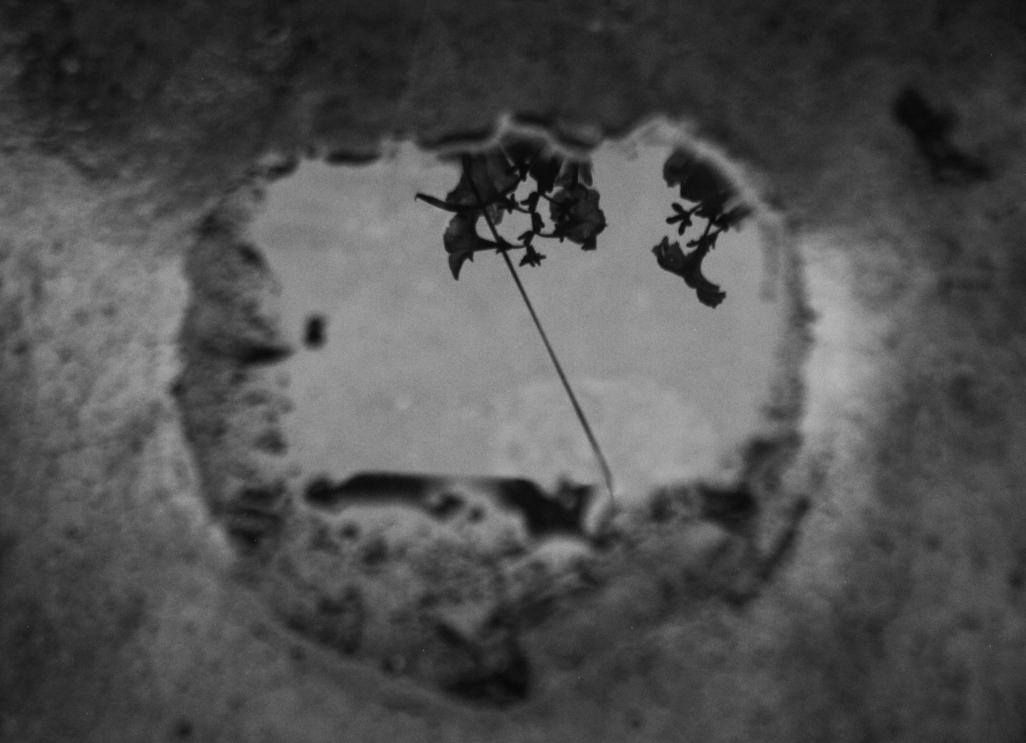 puddle by Anne Marie Alves-Curcic