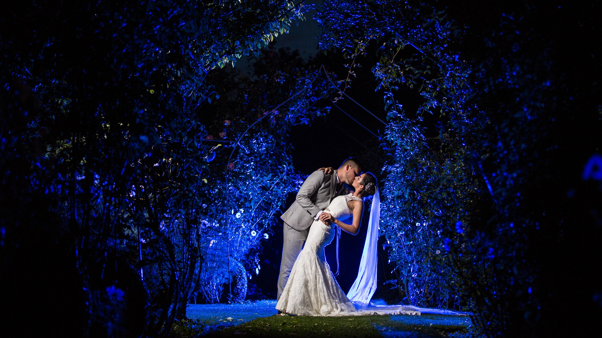 blue love  by Steven sparkes