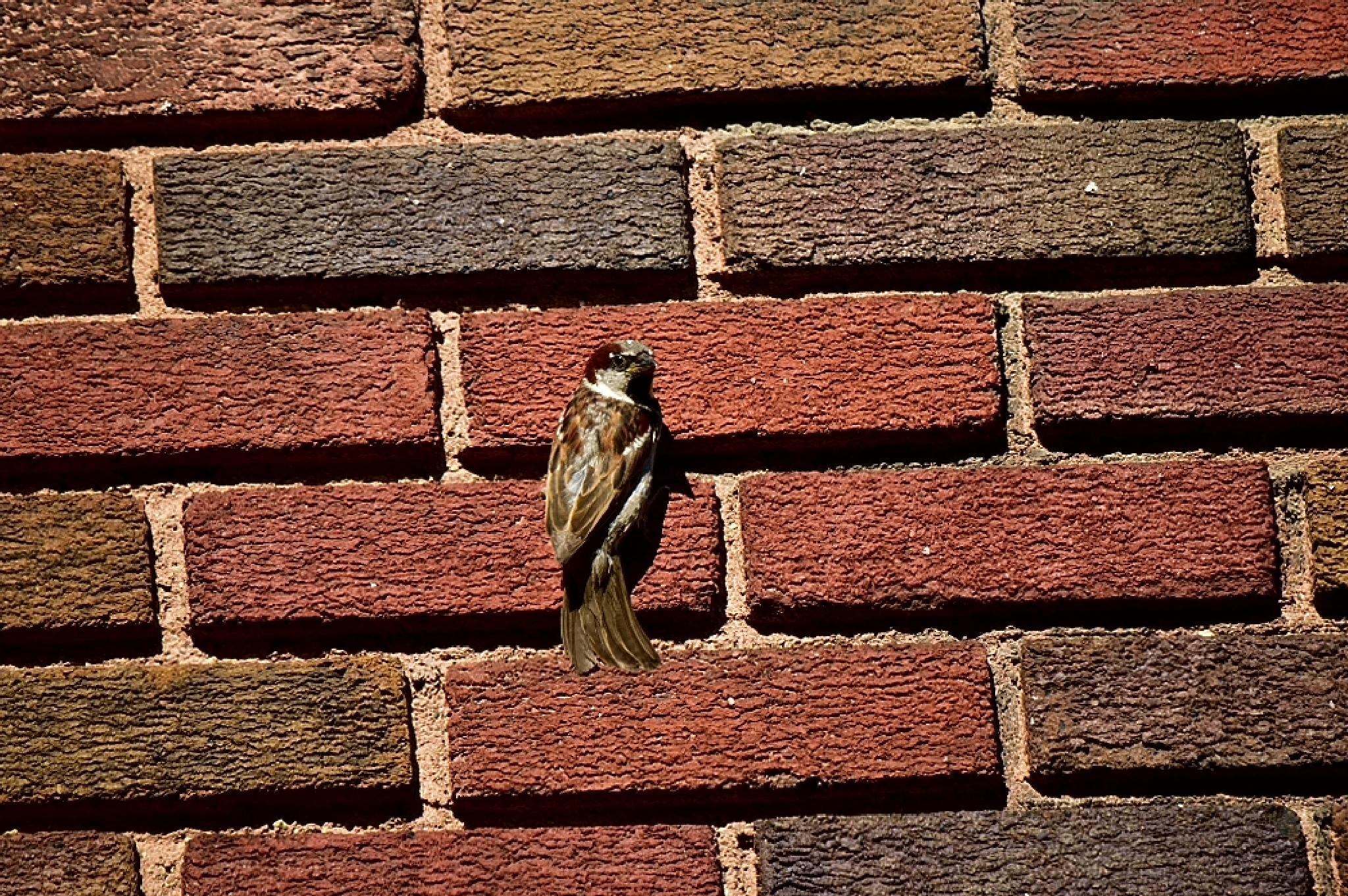 bird on the bricks by tim.hauser.73