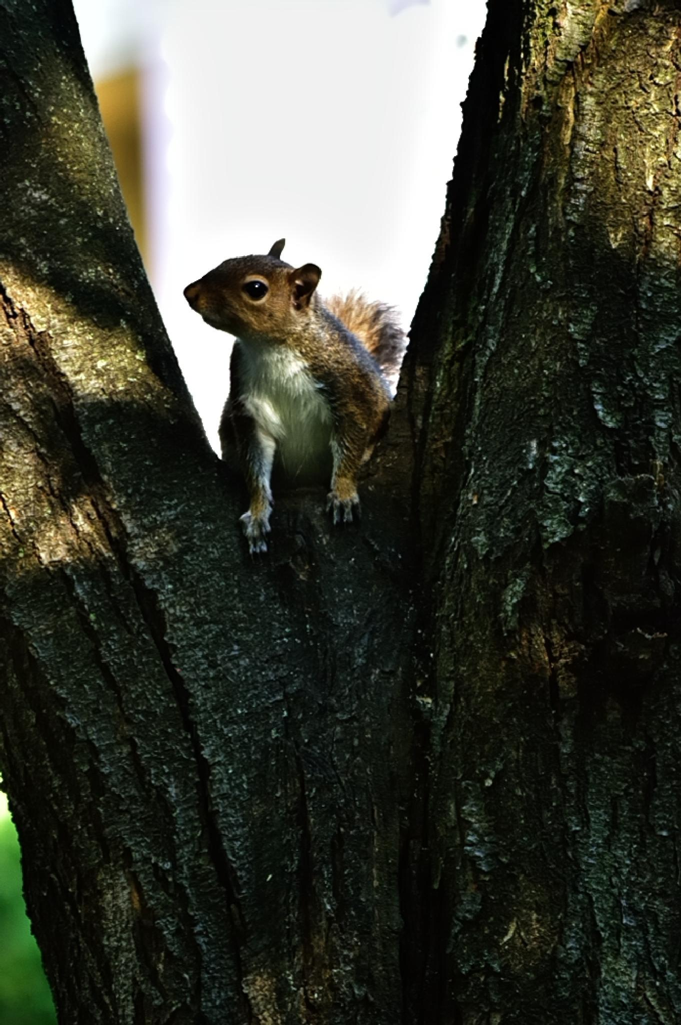 Photo in Animal #squirrel #animal #wildlife #tim hauser #tim hauser photography #wildlife photography