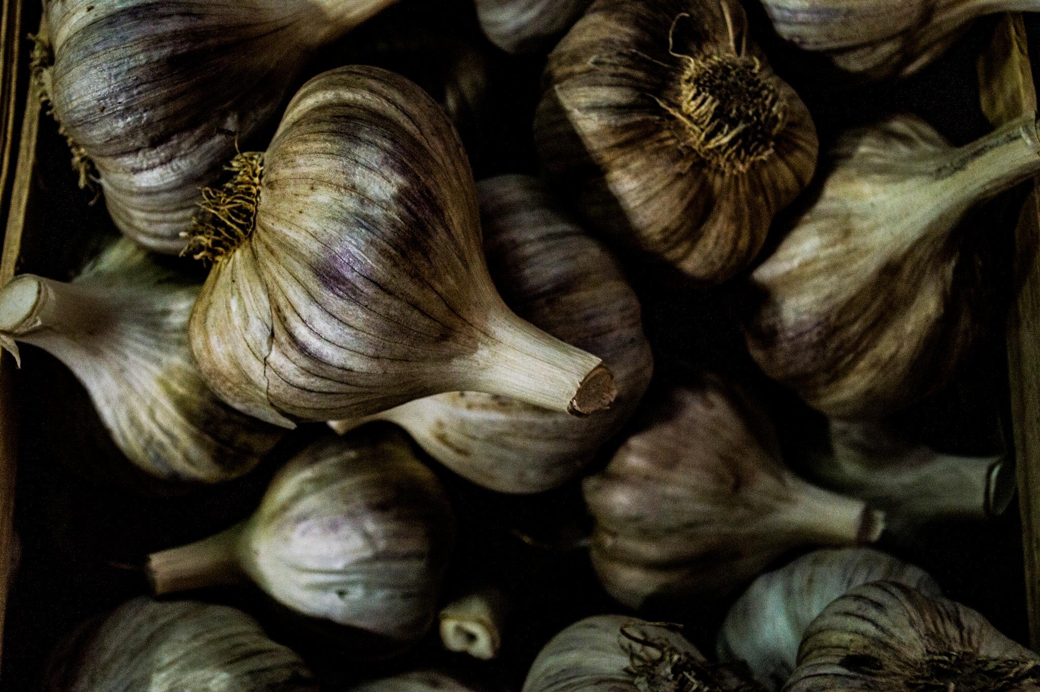 garlic by tim.hauser.73