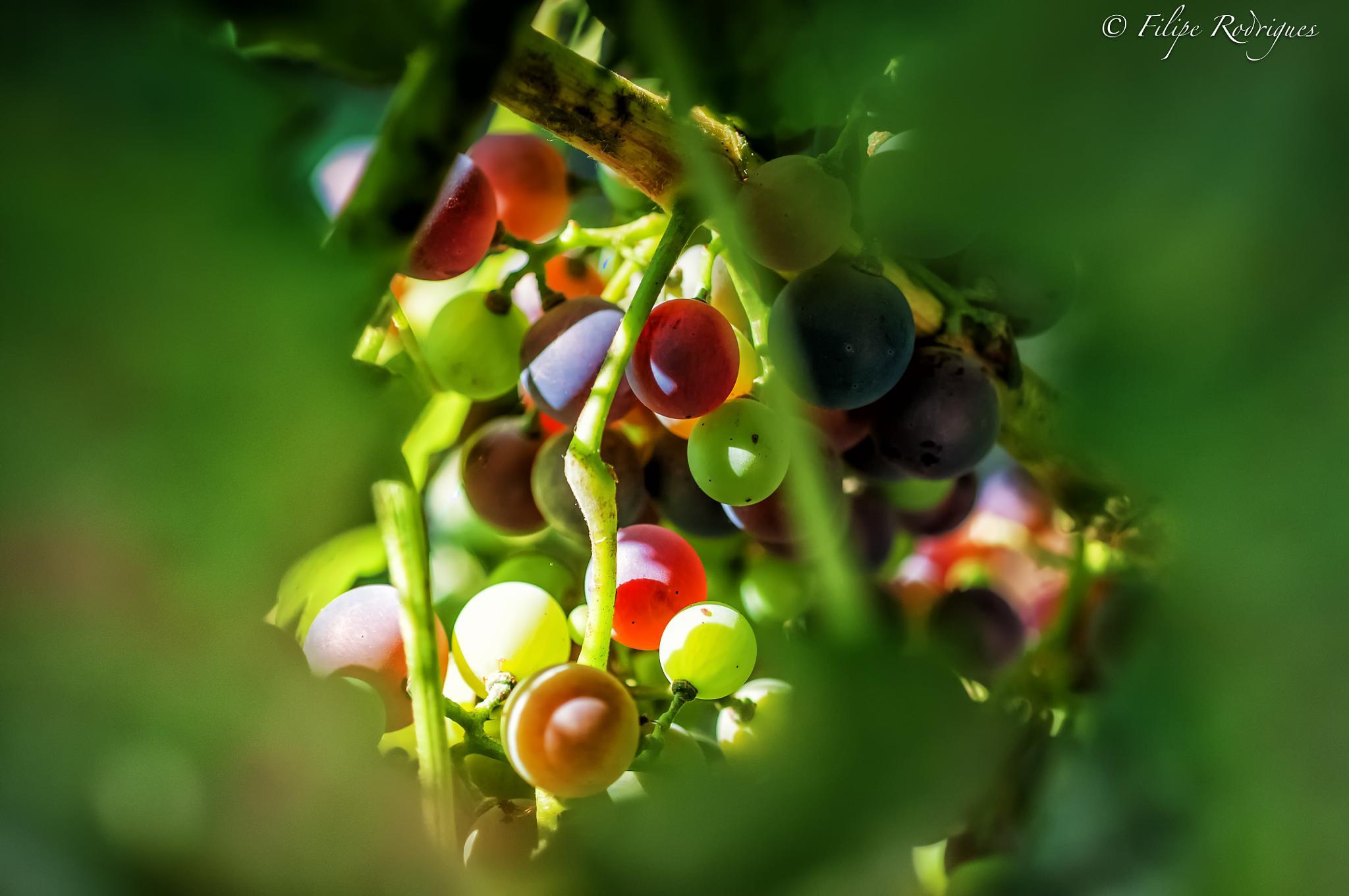 Wine by FilipeR