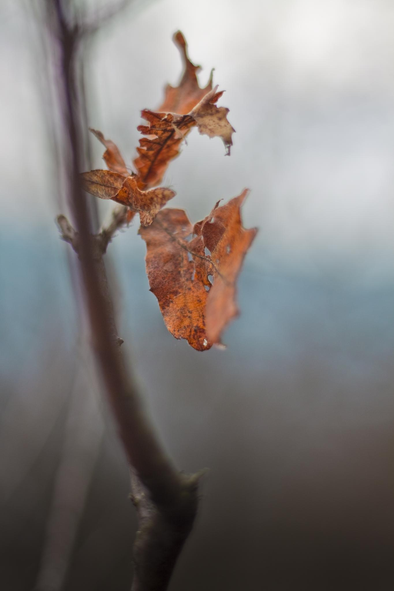 leaves by npo